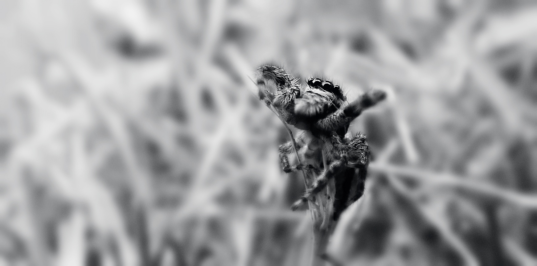Spider BW by LioNita Photography