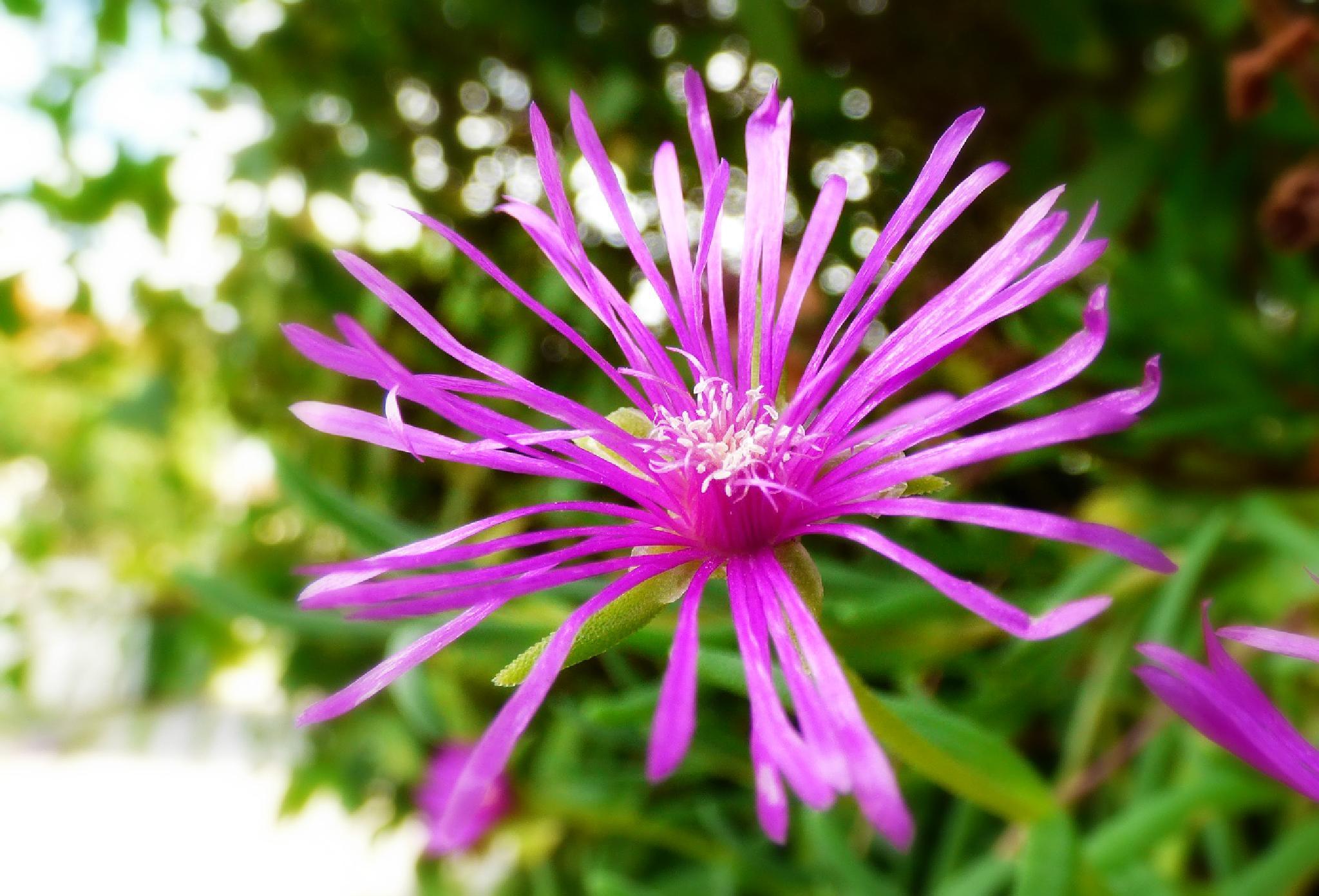 Pink Beauty by LioNita Photography