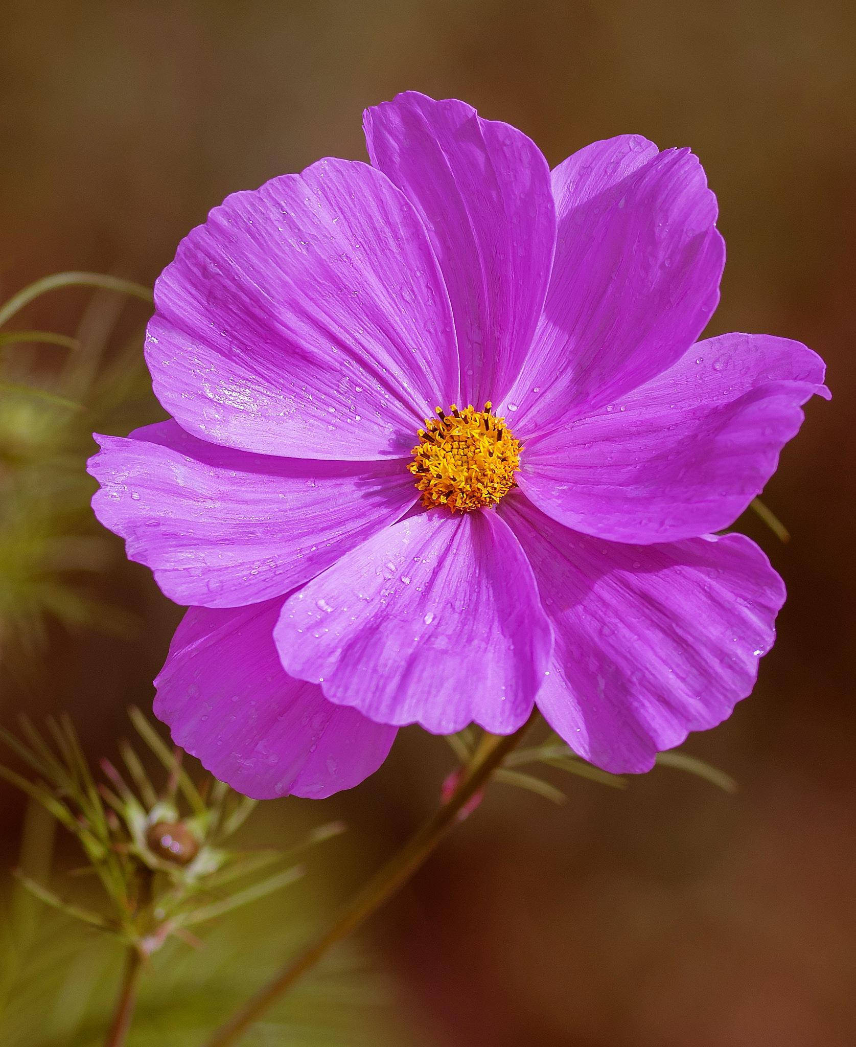 Floral Teardrops by corkymick