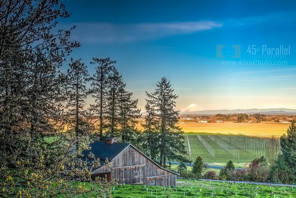 Photo in Landscape #oregon #willamette #valley #farm #agricultural #hops #evergreen #sunset #shadows #mount #mt #hood #blue #sky #countryside #landscape