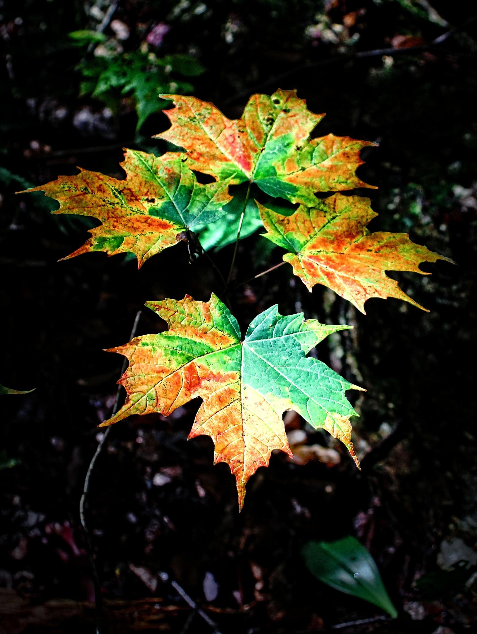 Autumn Leaves by John Bork