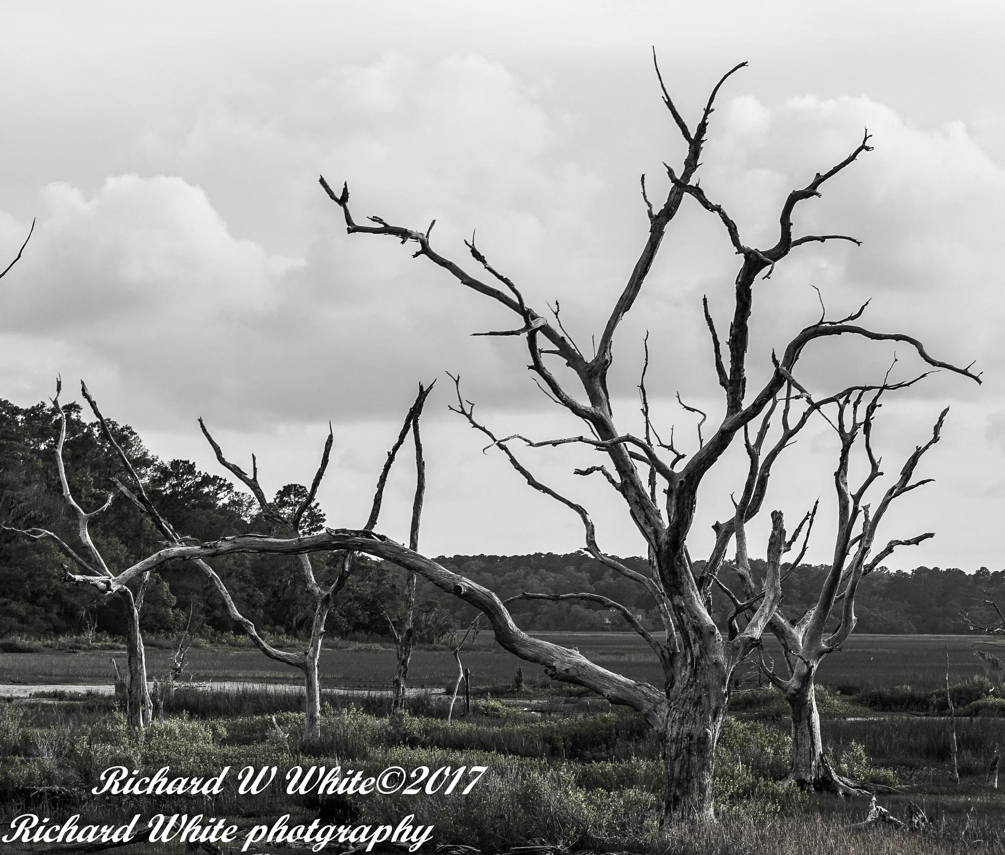 Deadwood by eaglescout