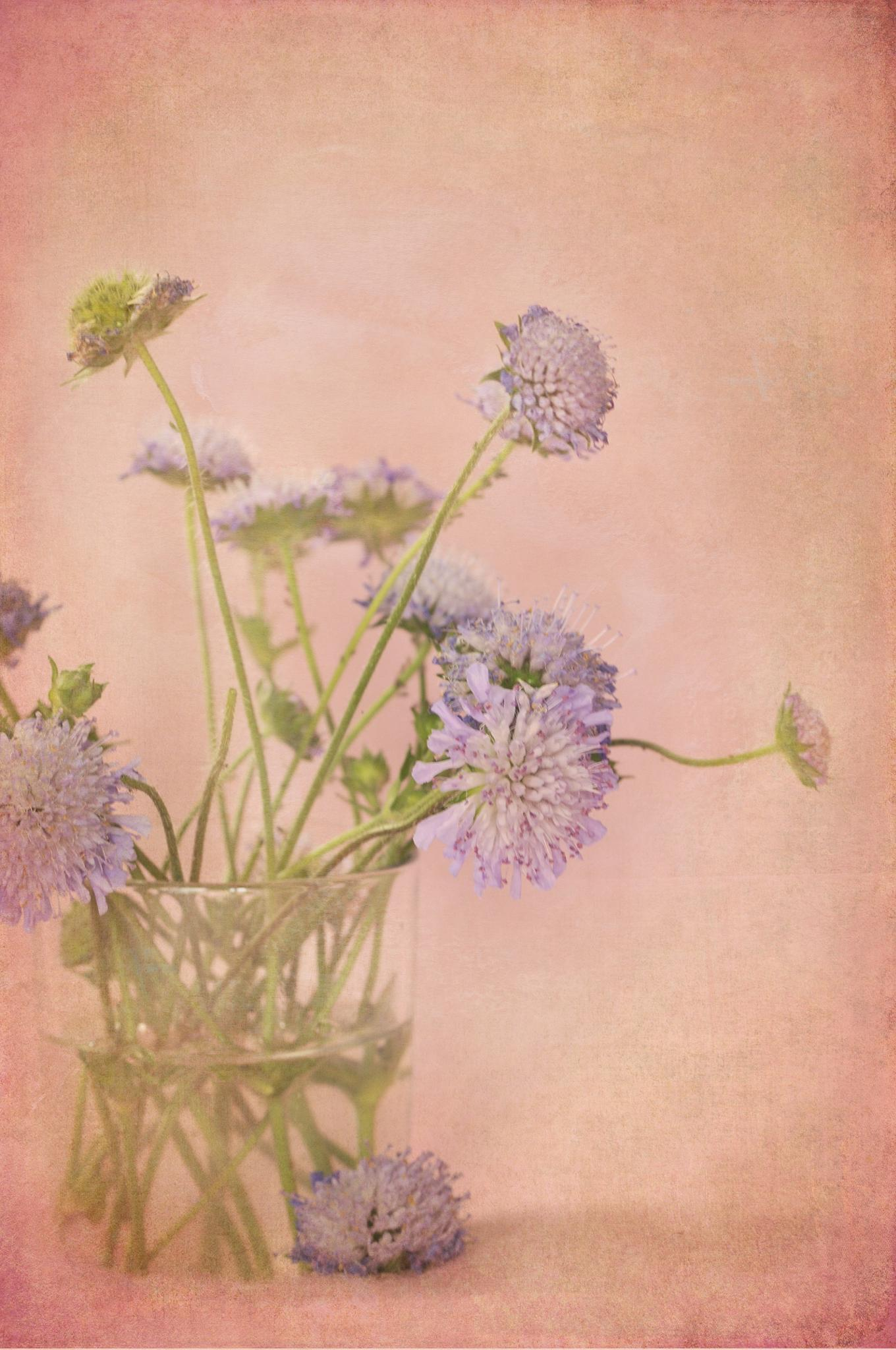 Photo in Still Life #wild flowers #cornflowers #blue #purple #still life