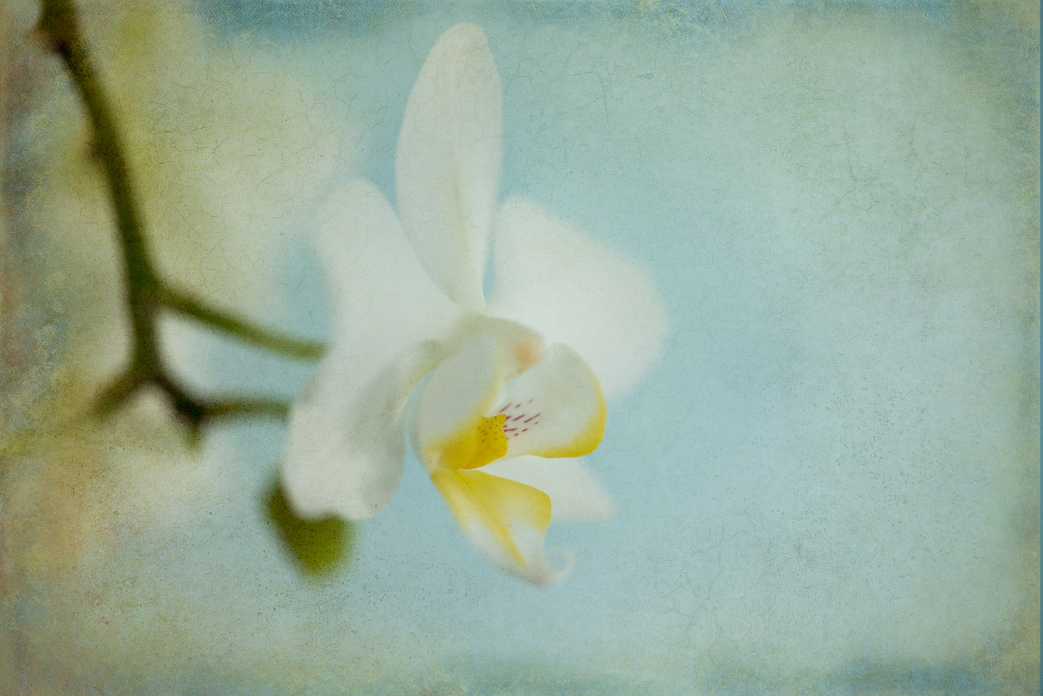 White Orchid by Cath Hardwick