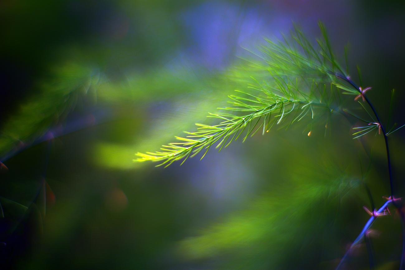 asparagus  by Zinovi Seniak