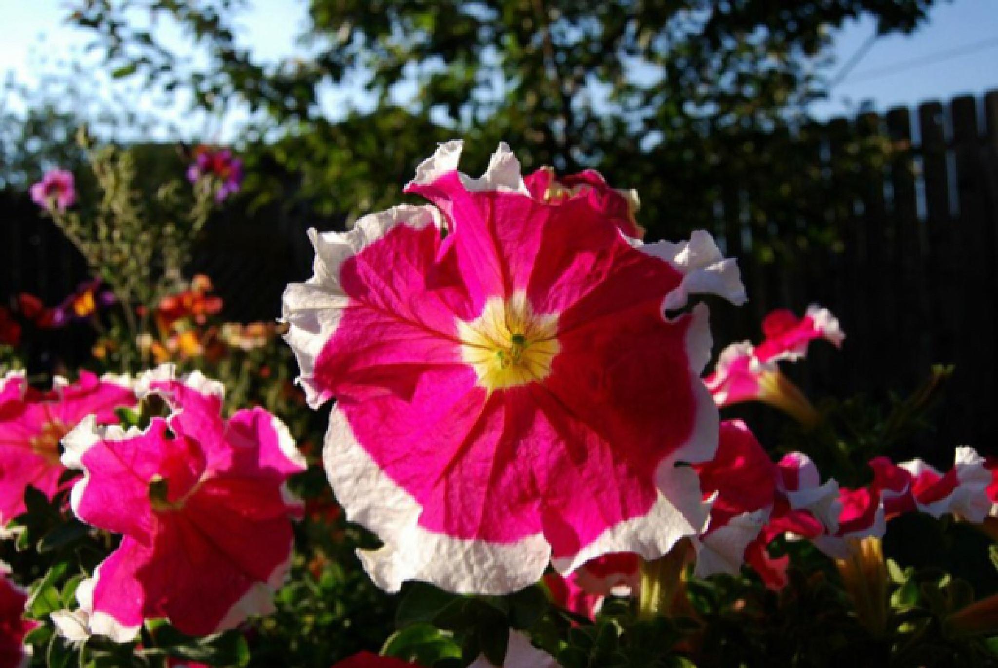 Vibrant Flowers by Jennifer Doty