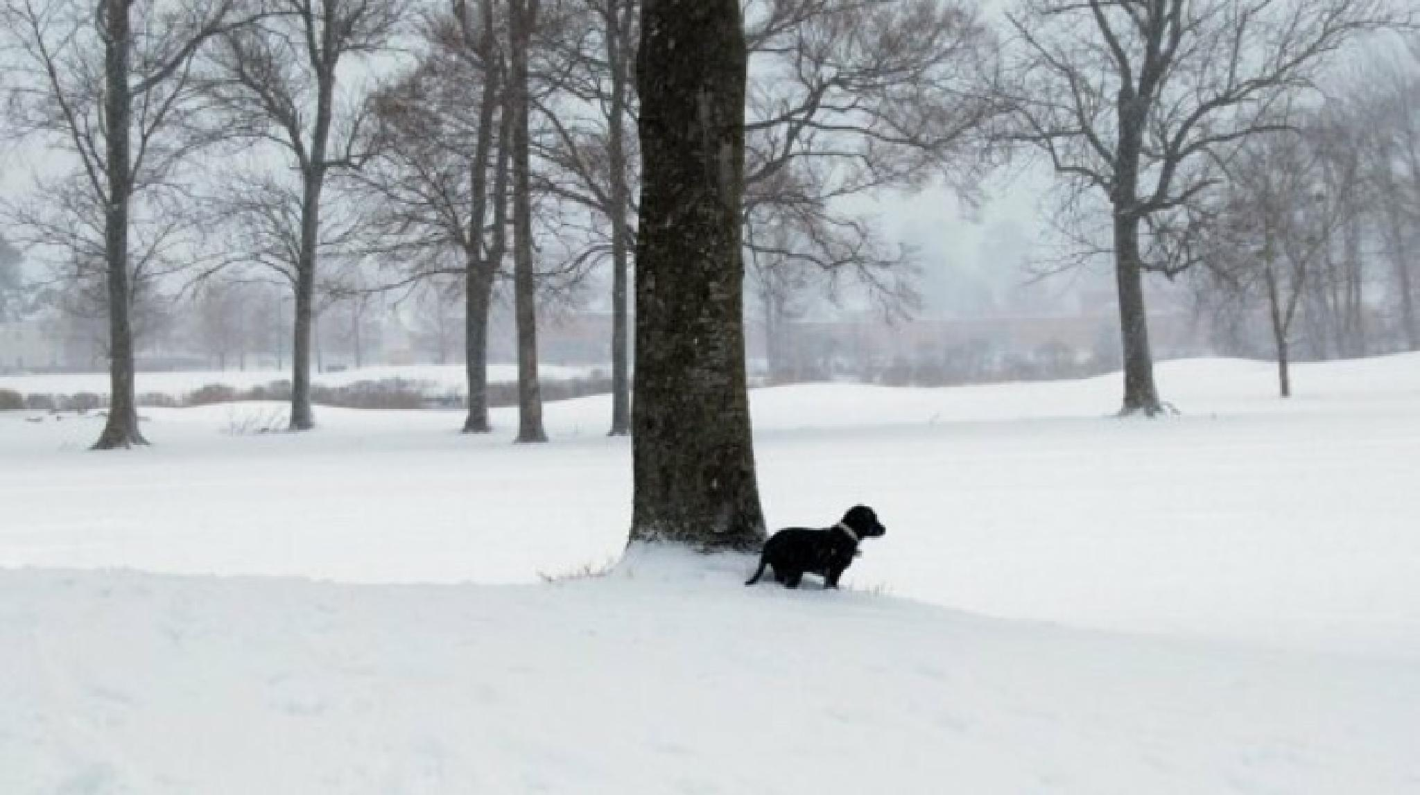 Photo in Nature #puppy #snow #nature #winter #dog