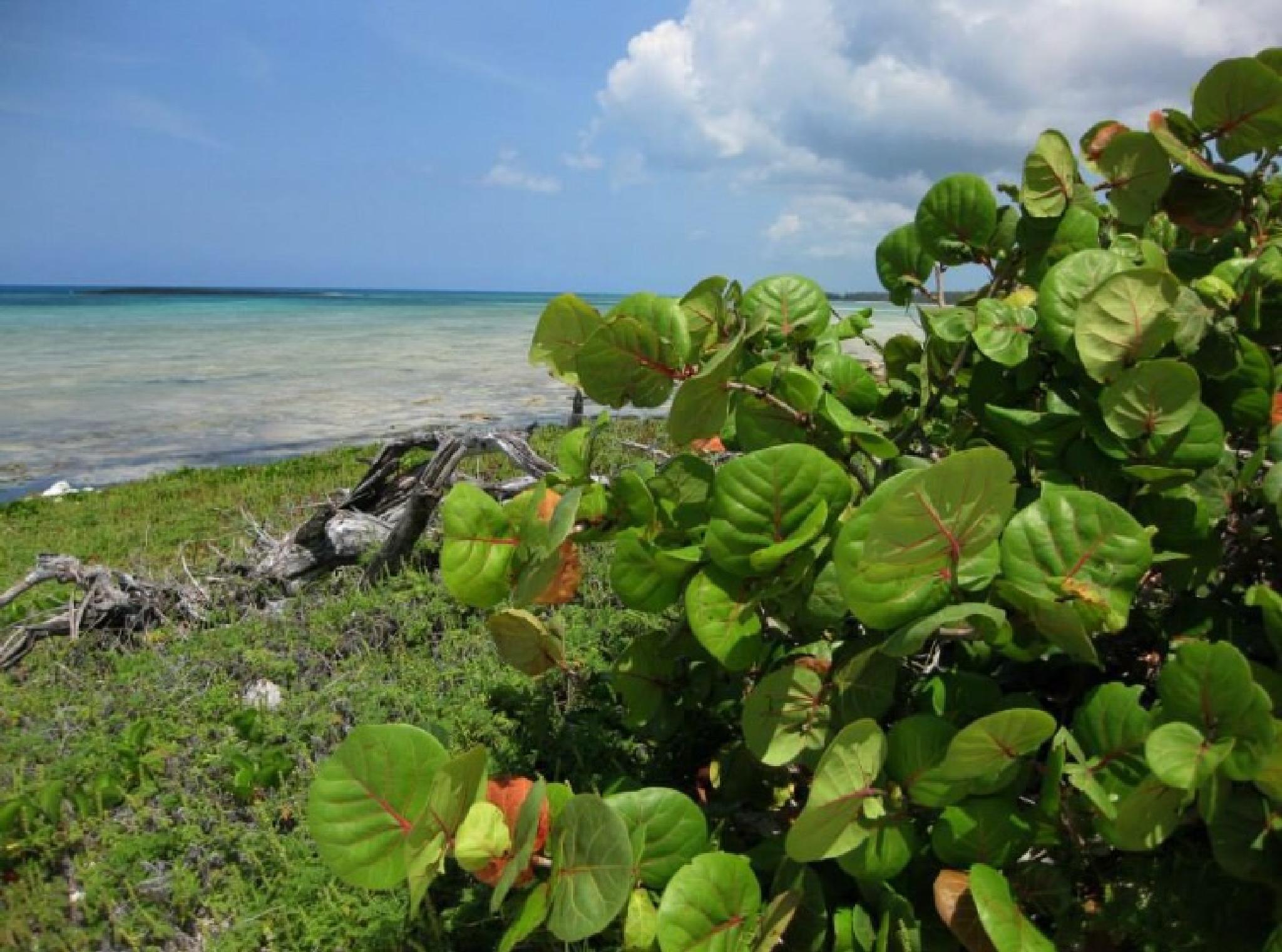 Photo in Nature #tropical #paradise #bahamas #water #beach #coast #nature #travel #freeport