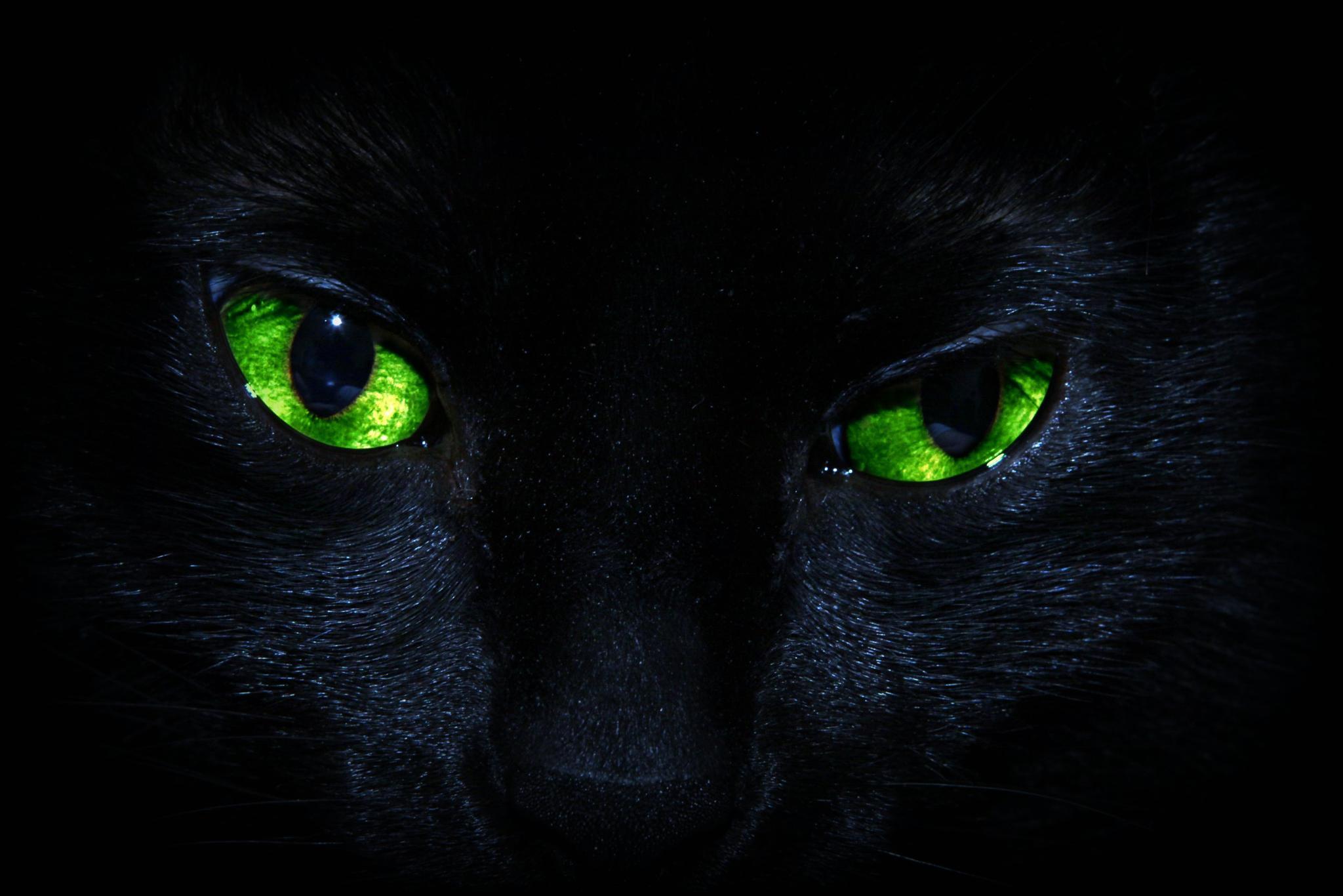Photo in Animal #cat #macro #eyes #feline #pet #canon