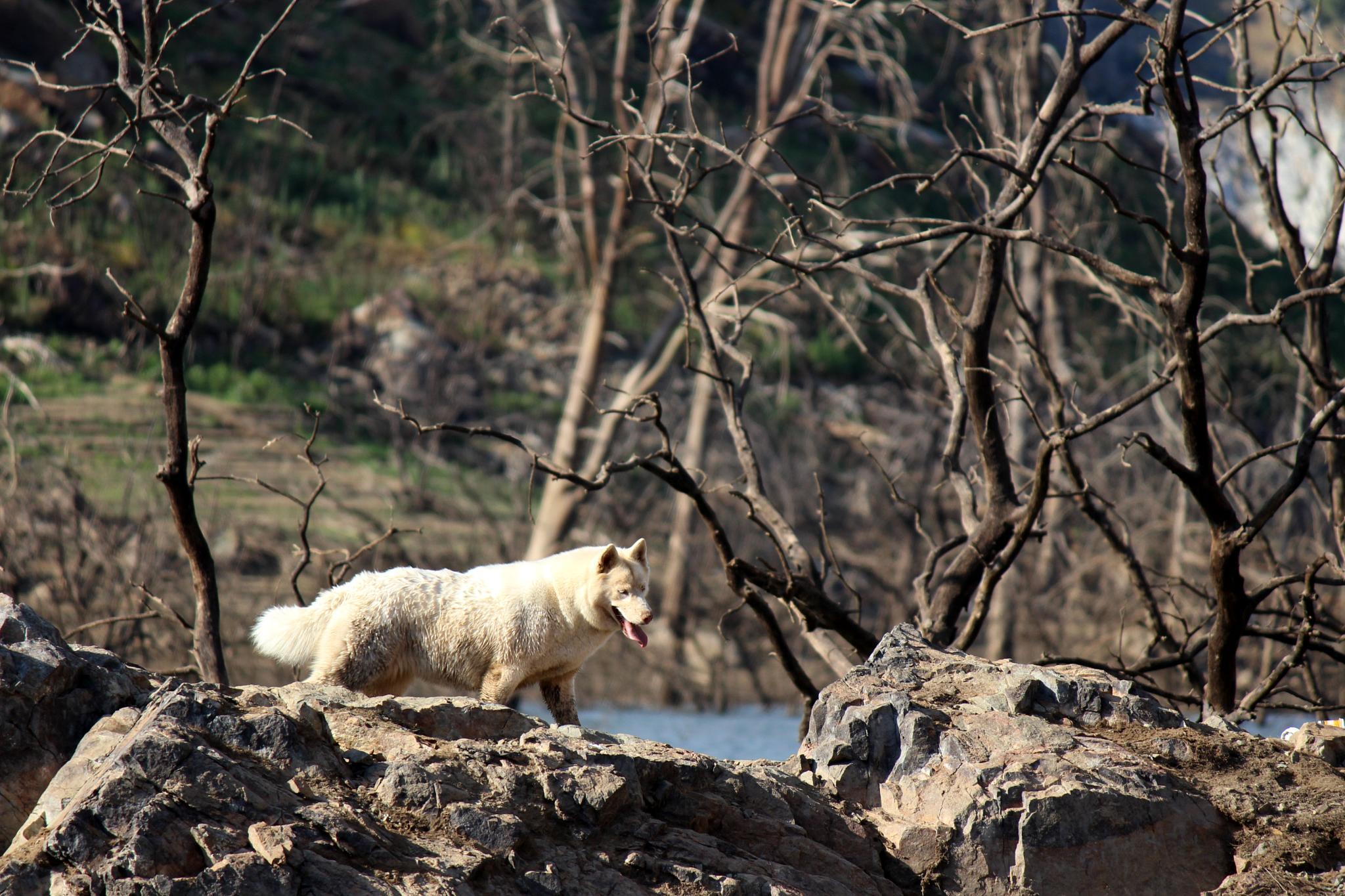Photo in Random #dog #rock tree
