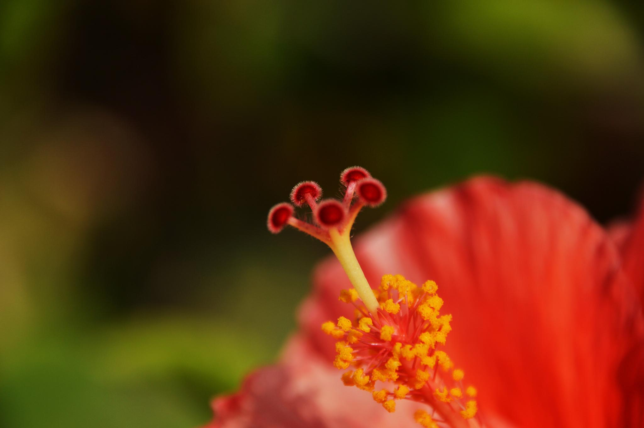 You're beautiful its true ~ Hibiscus :P by eem ardee