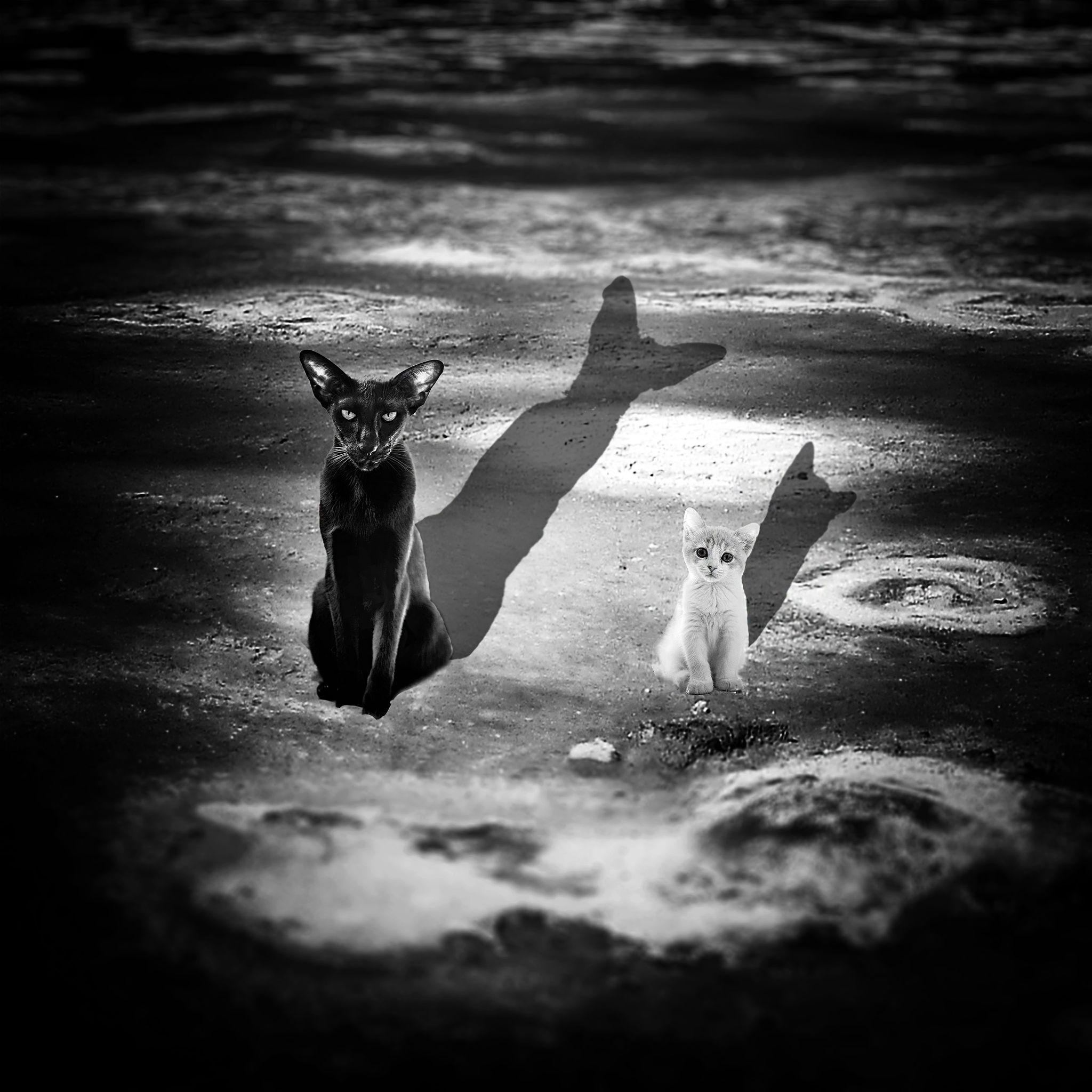 Crna mačka, beli mačor by R. Kruglinski