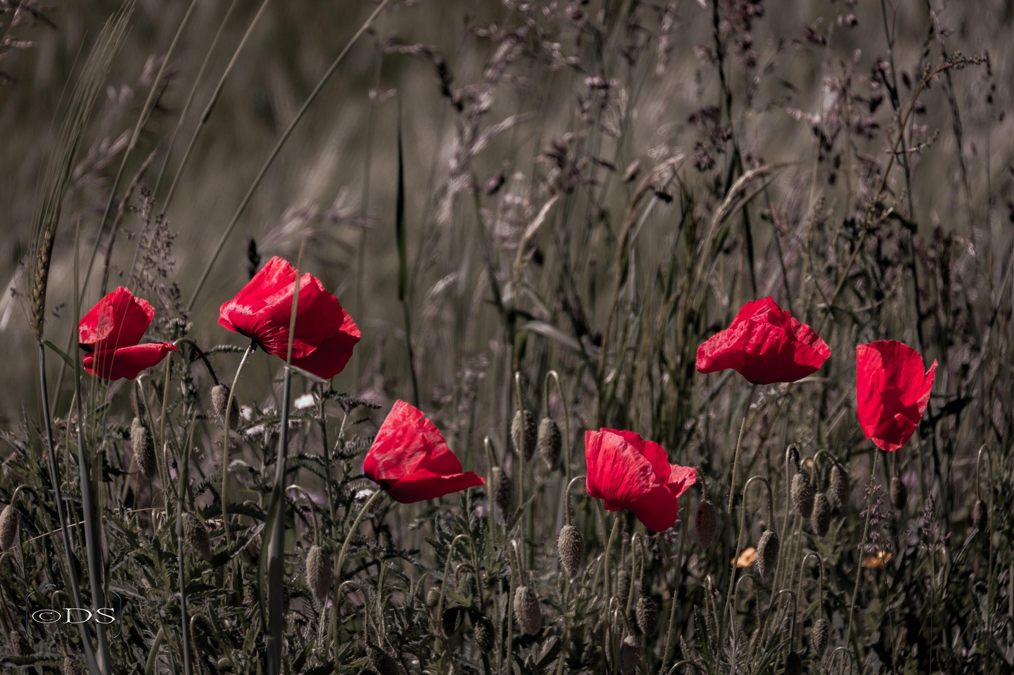 Flowers by Darko Solina