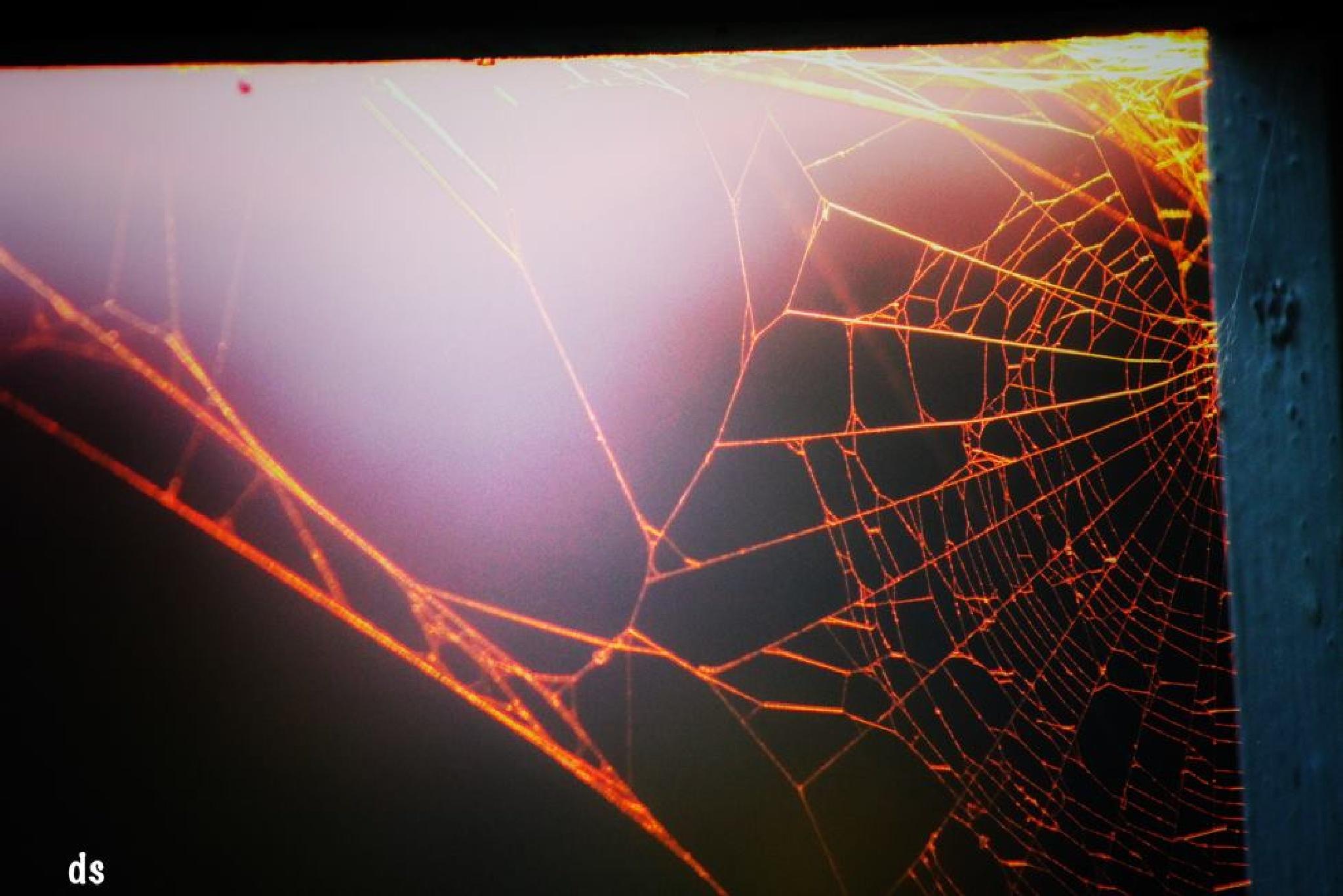 Spider web by Darko Solina