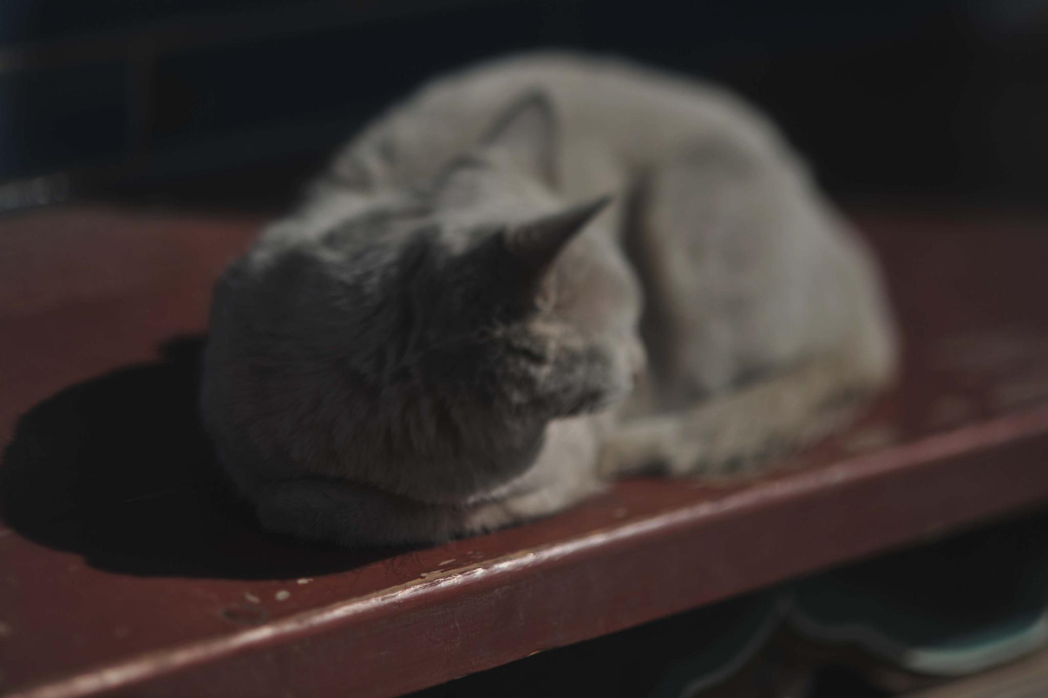 ...在 中國內蒙古自治區呼和浩特市 大召寺 的 猫... by cyccanhk