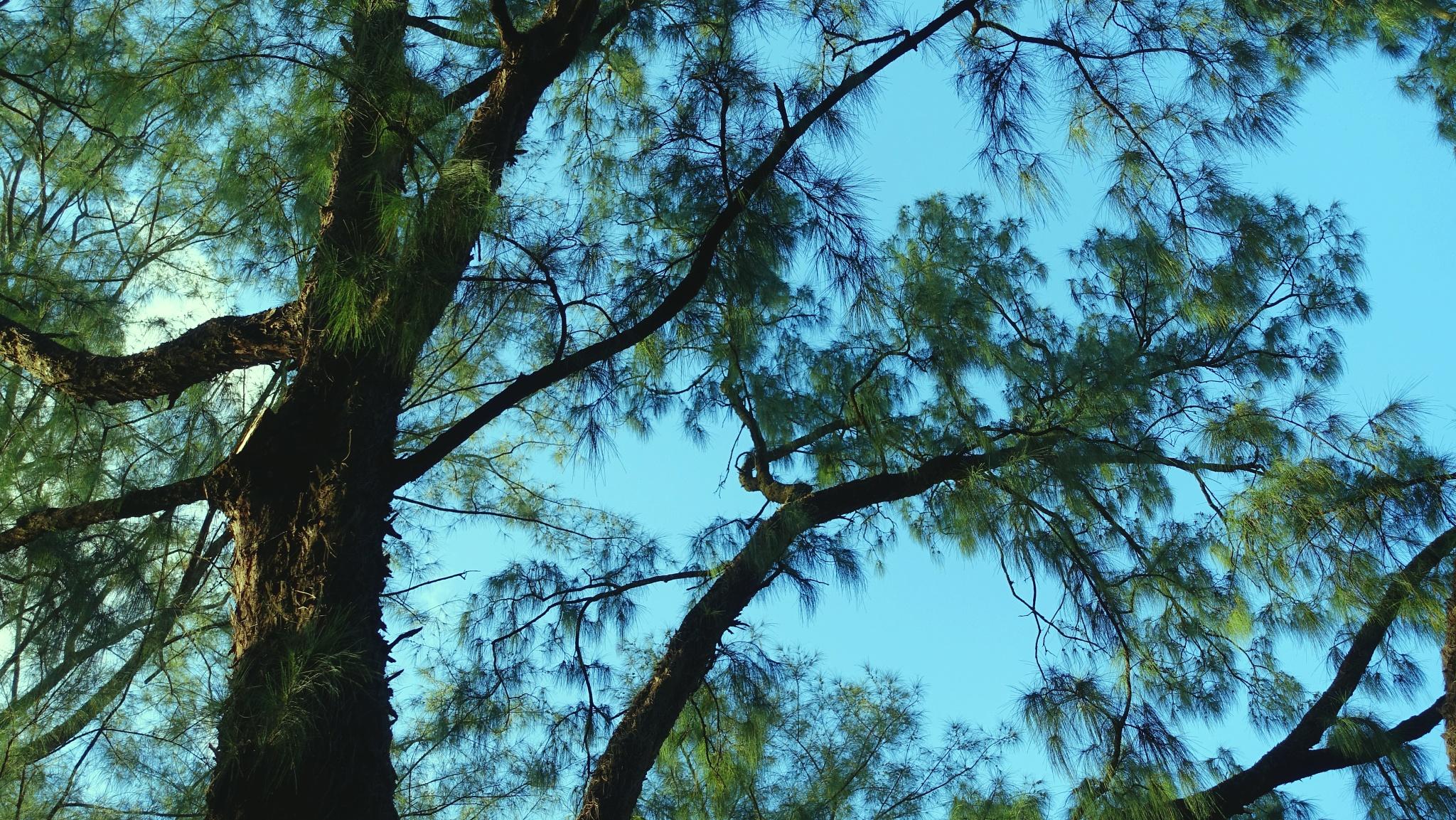 ...樹木... by cyccanhk