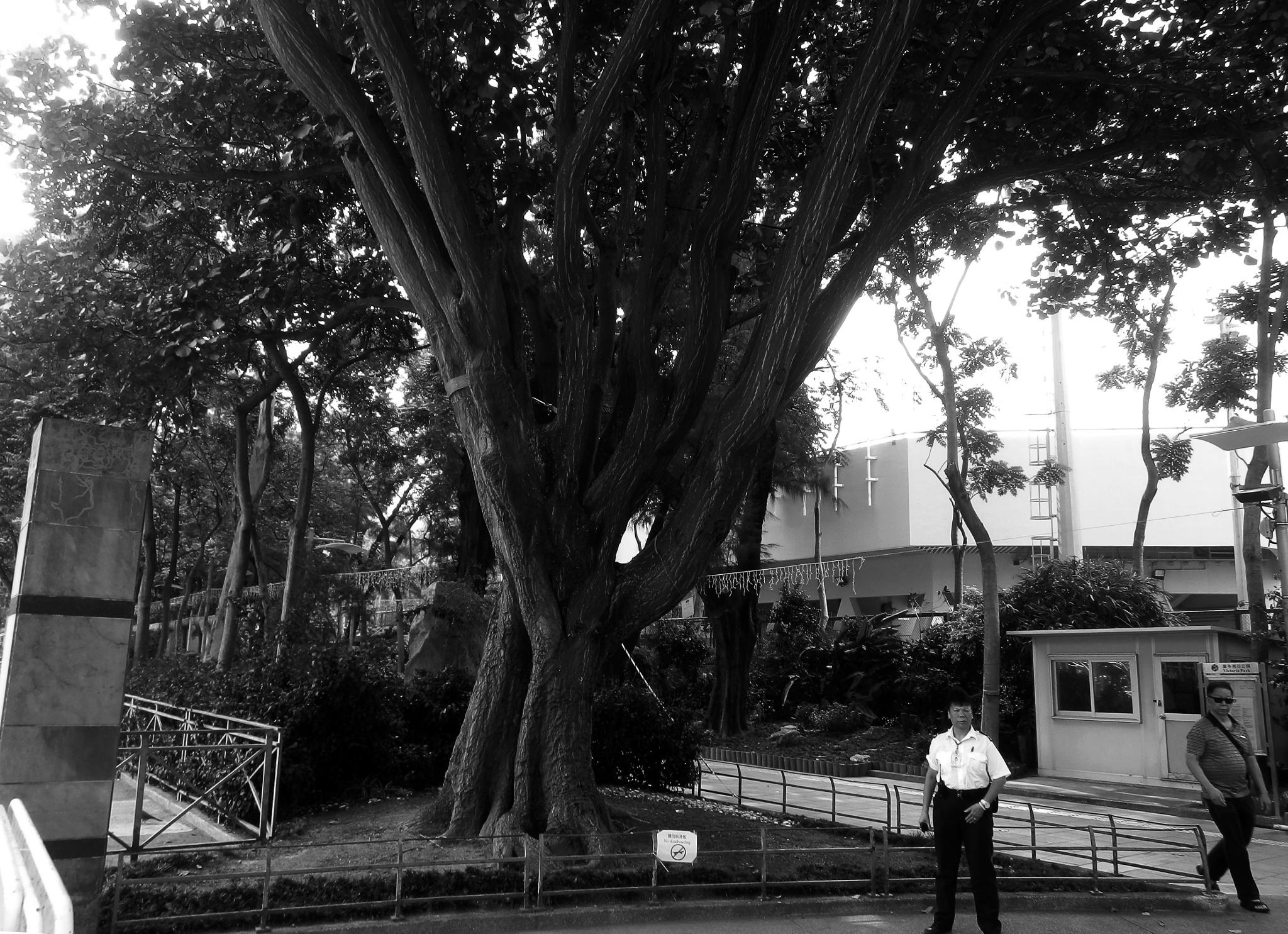...the tree... by cyccanhk