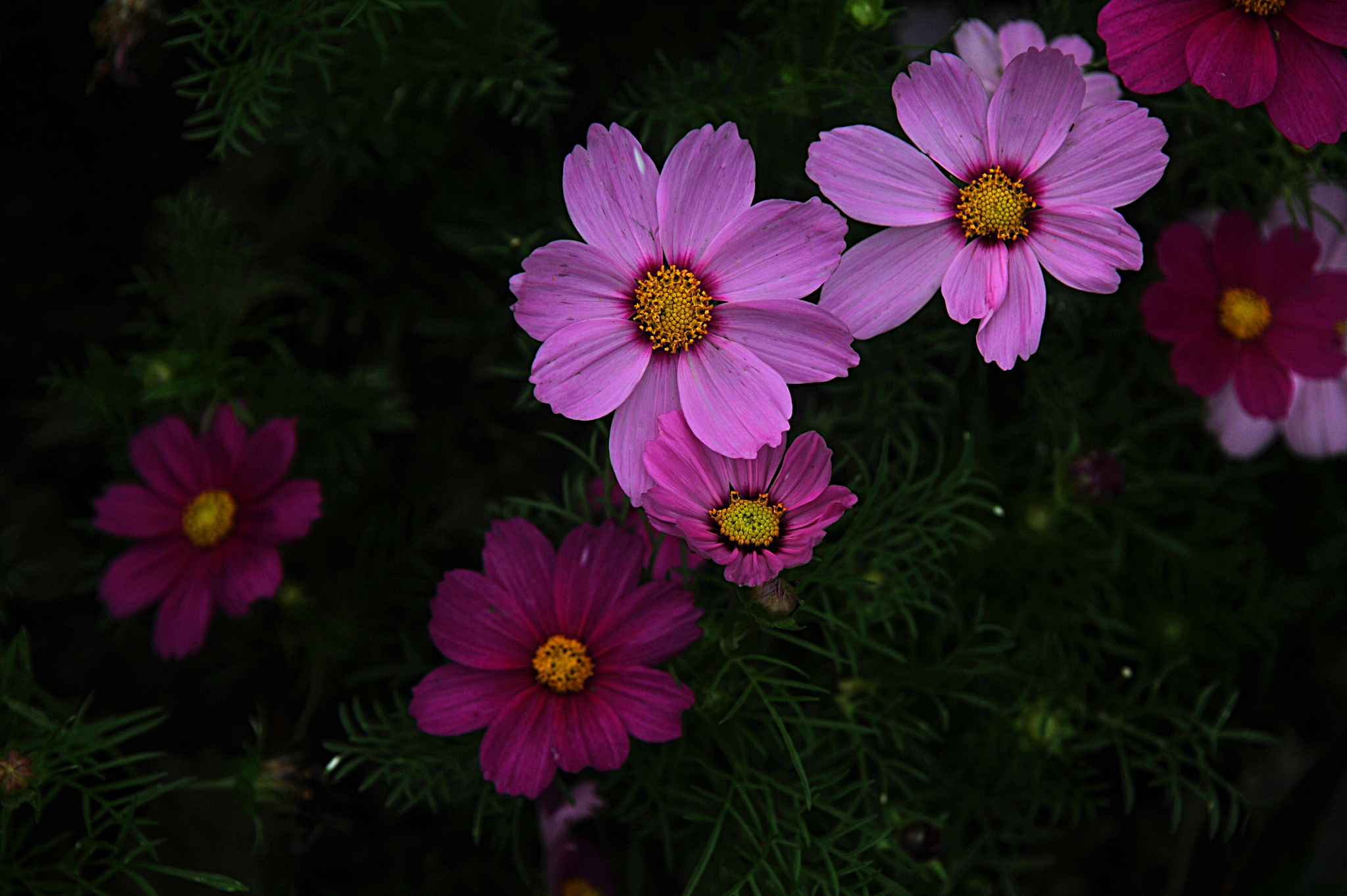 ...flowers at the 成都大熊猫繁育研究基地... by cyccanhk