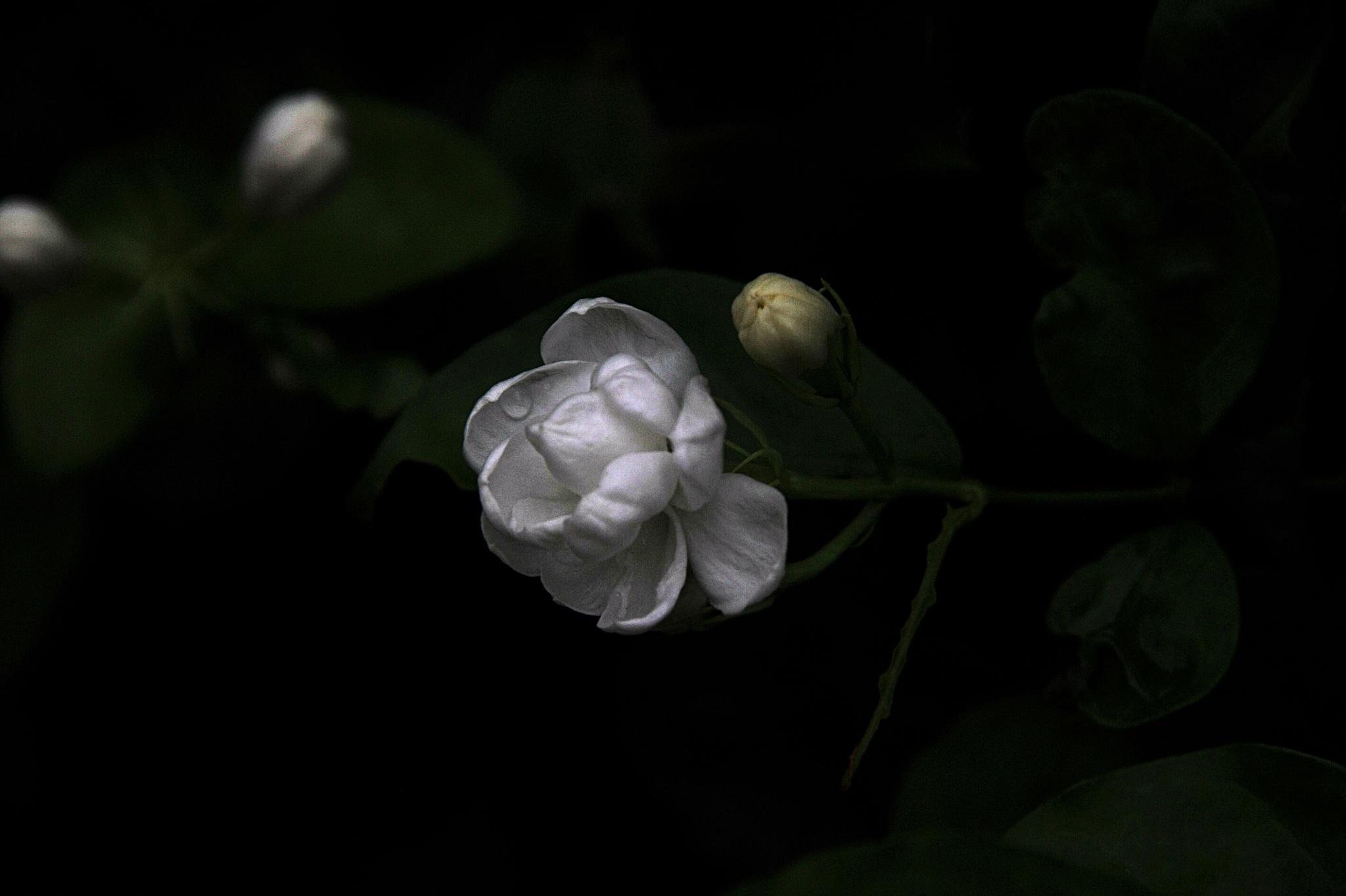 ...a flower... by cyccanhk