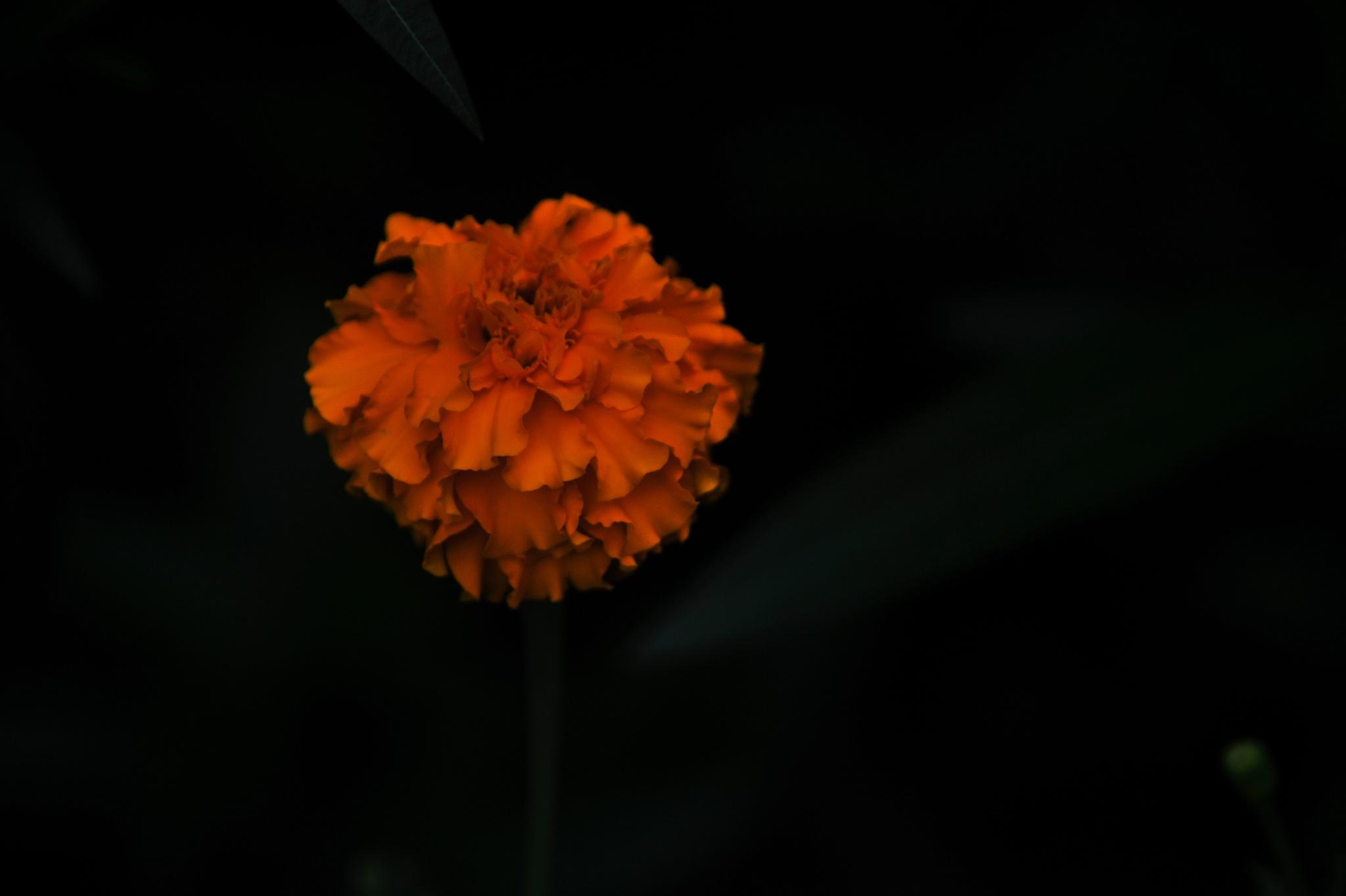 ...花... by cyccanhk