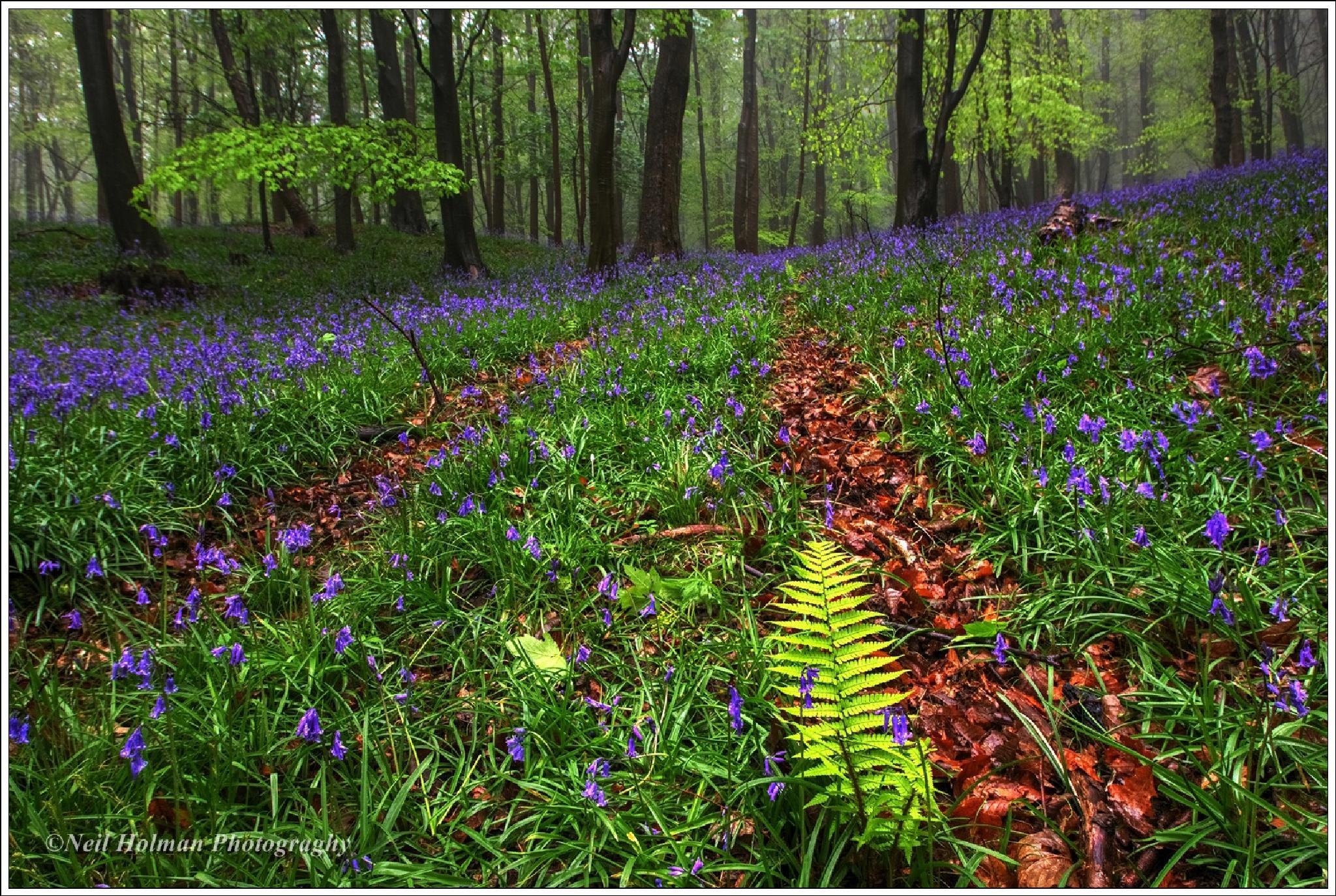 Margam Woods by Neil Holman