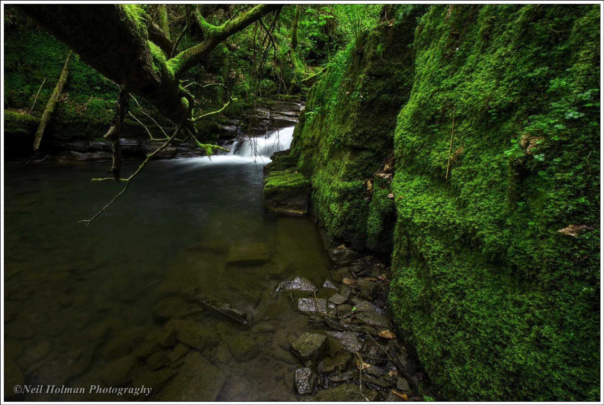 Melincourt Brook by Neil Holman