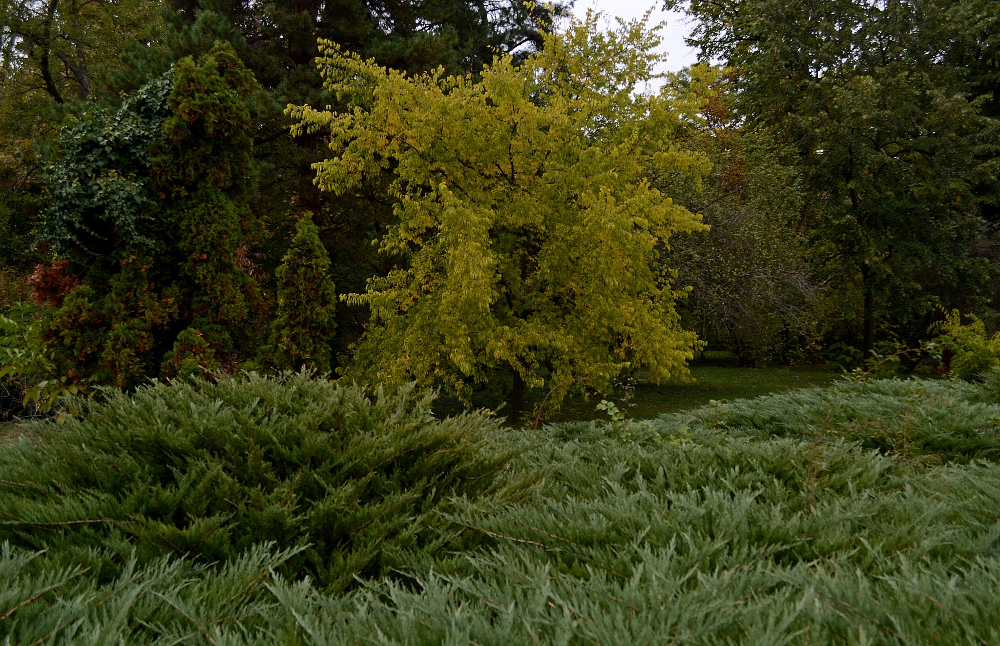 Autumn in park by staicugheorghe3