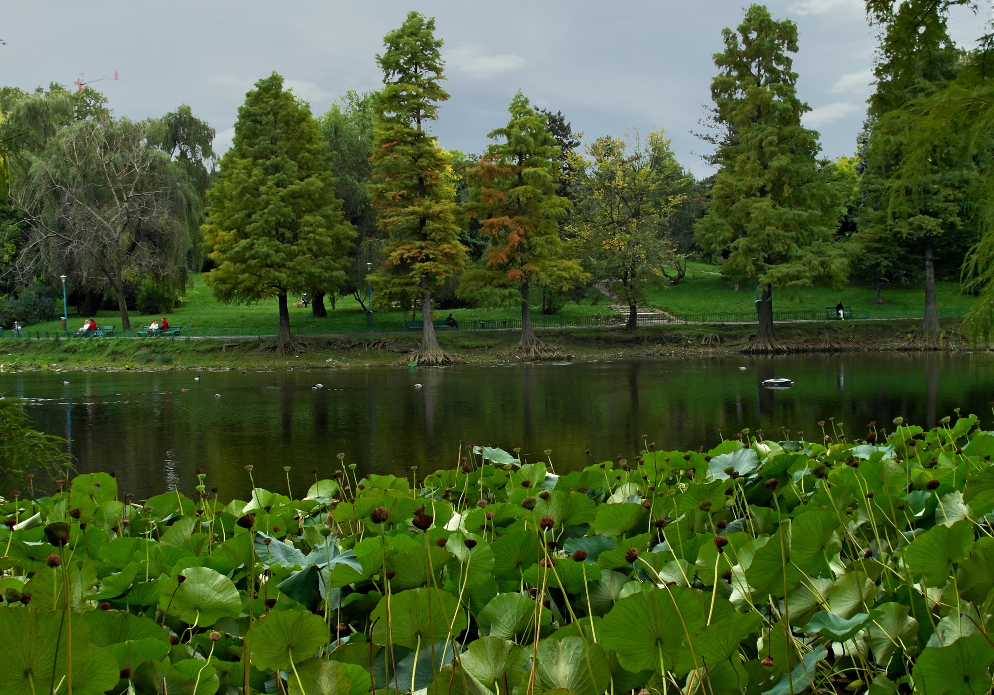 Autumn day,in Circus park 1.Bucharest by staicugheorghe3