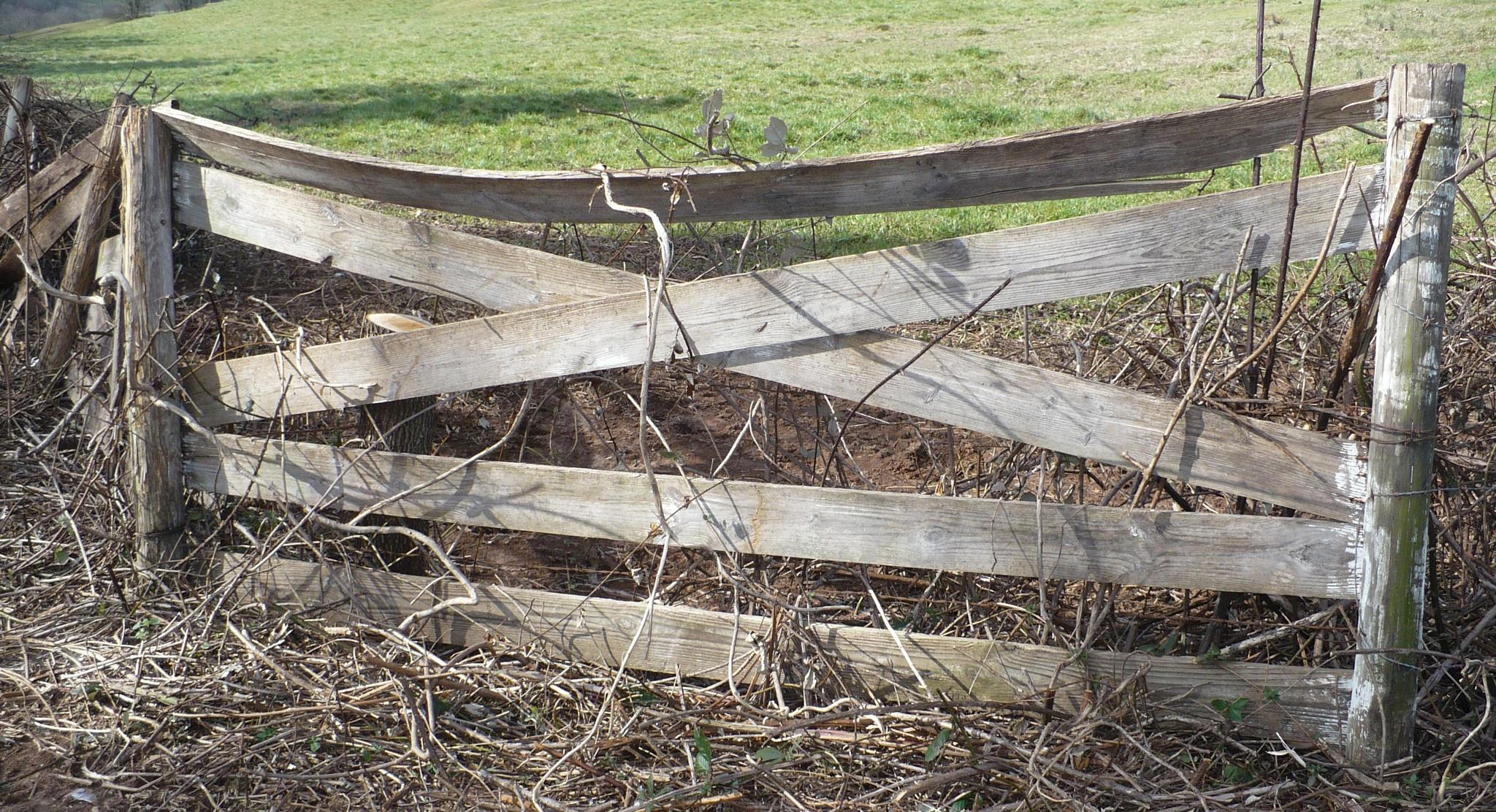 Old Farm Fence by Joan Barrett