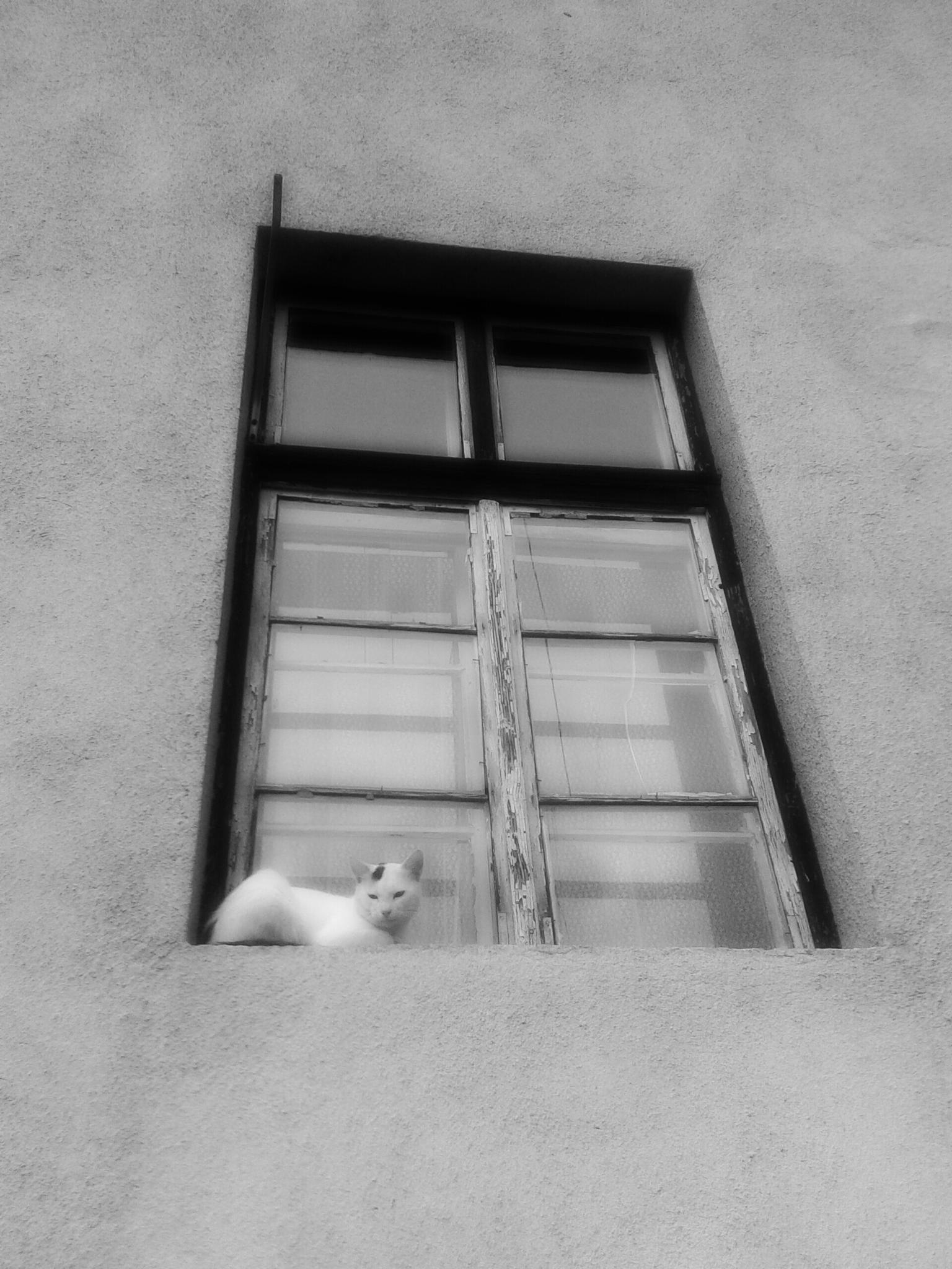 Untitled by slavko.pjevcevic