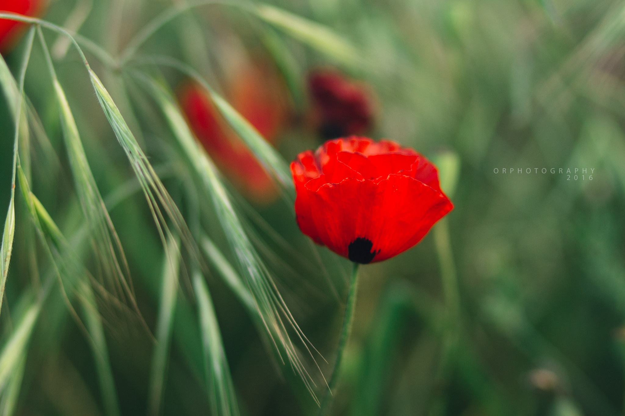 Photo in Nature #red #green #flower #canon #photography #85 #f2 #2.0 #bokeh