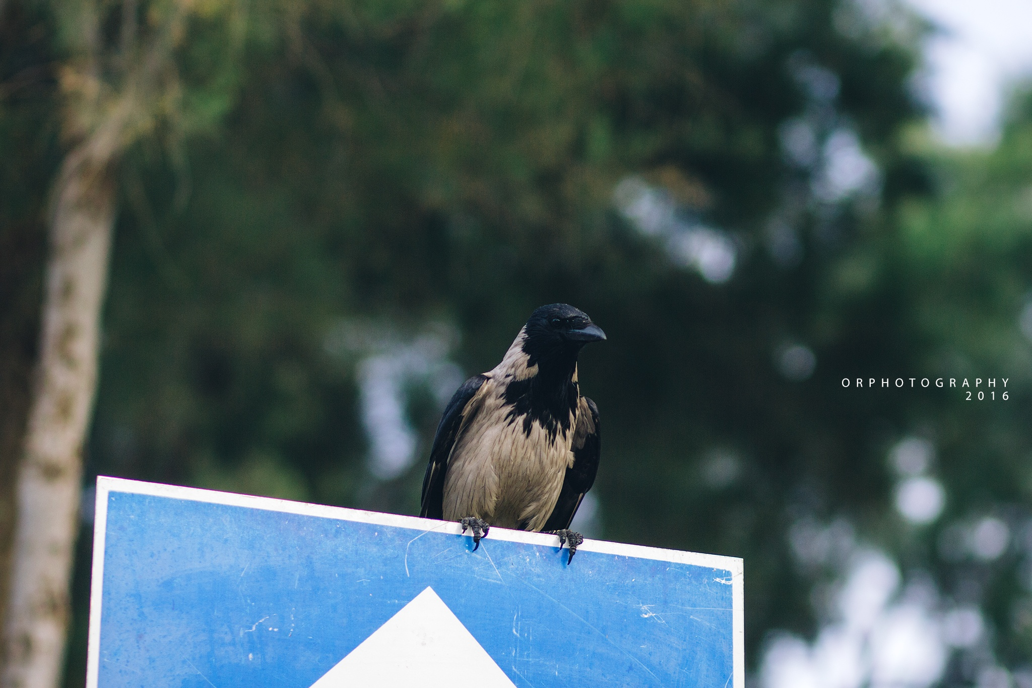 Photo in Animal #85 #canon #photography #60d #sign #park #aperture