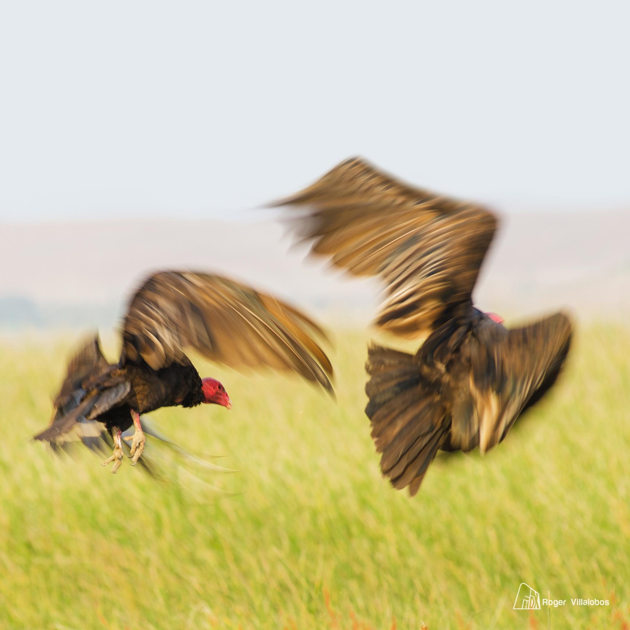 In flying by Roger Villalobos Medina