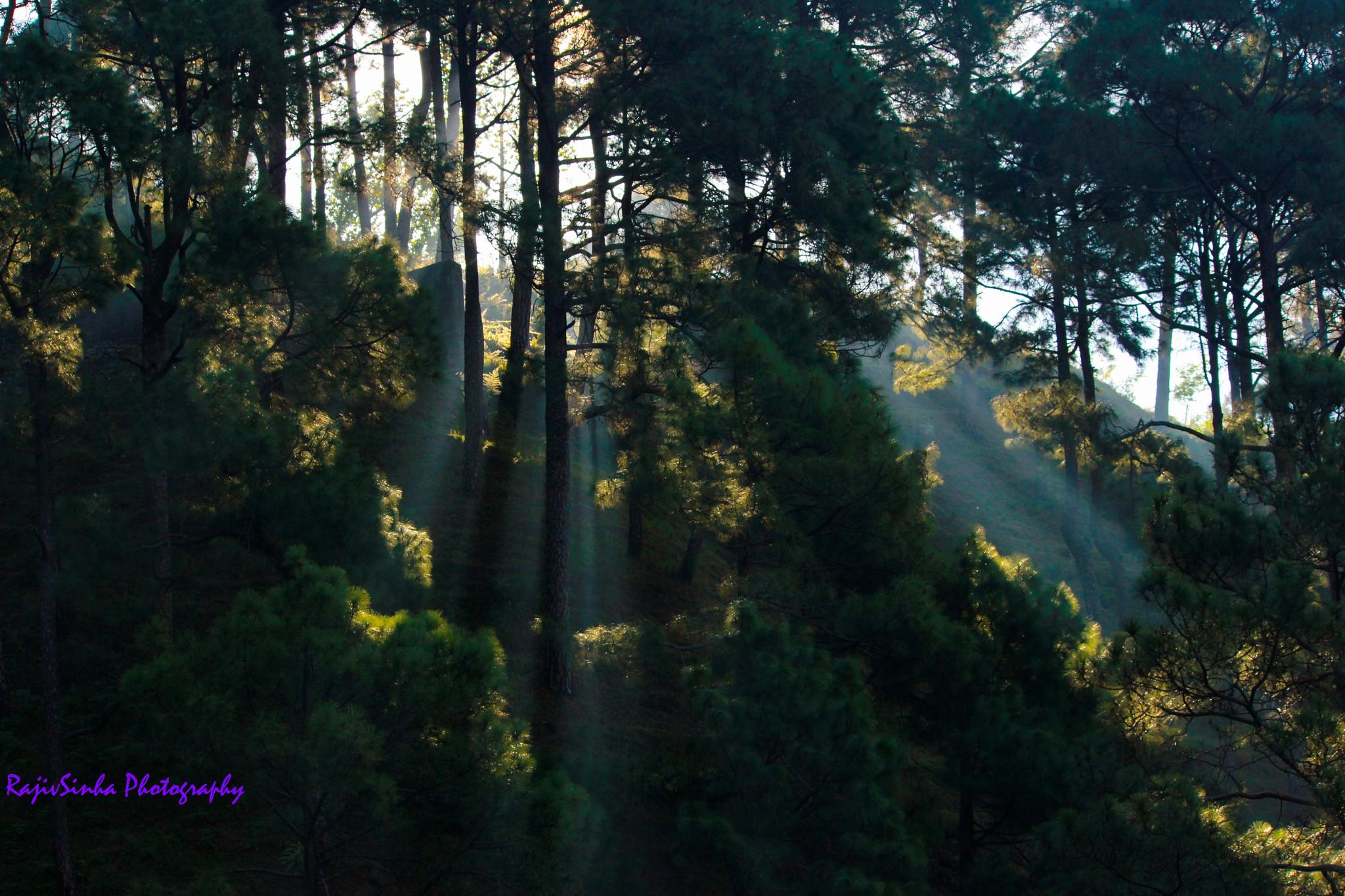 Ray of hope by Rajiv Sinha Photography