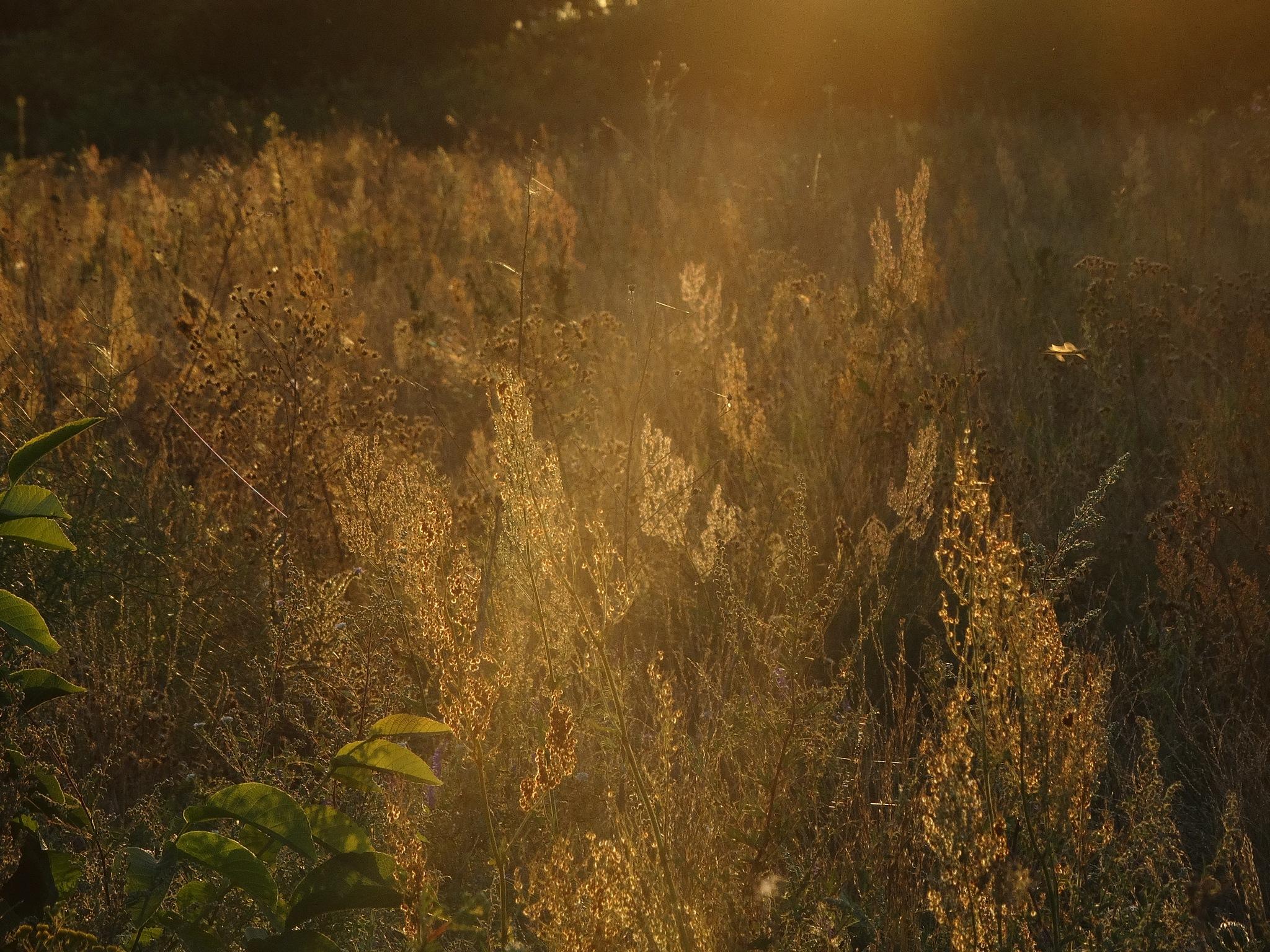 Sun artist. by jon.rambo.37819