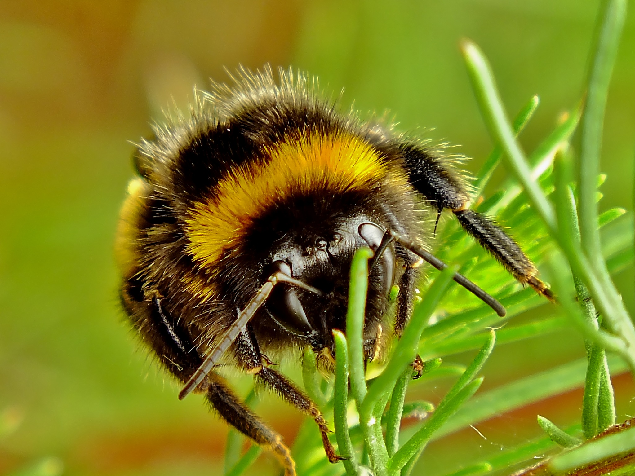 Bumblebee. by jon.rambo.37819