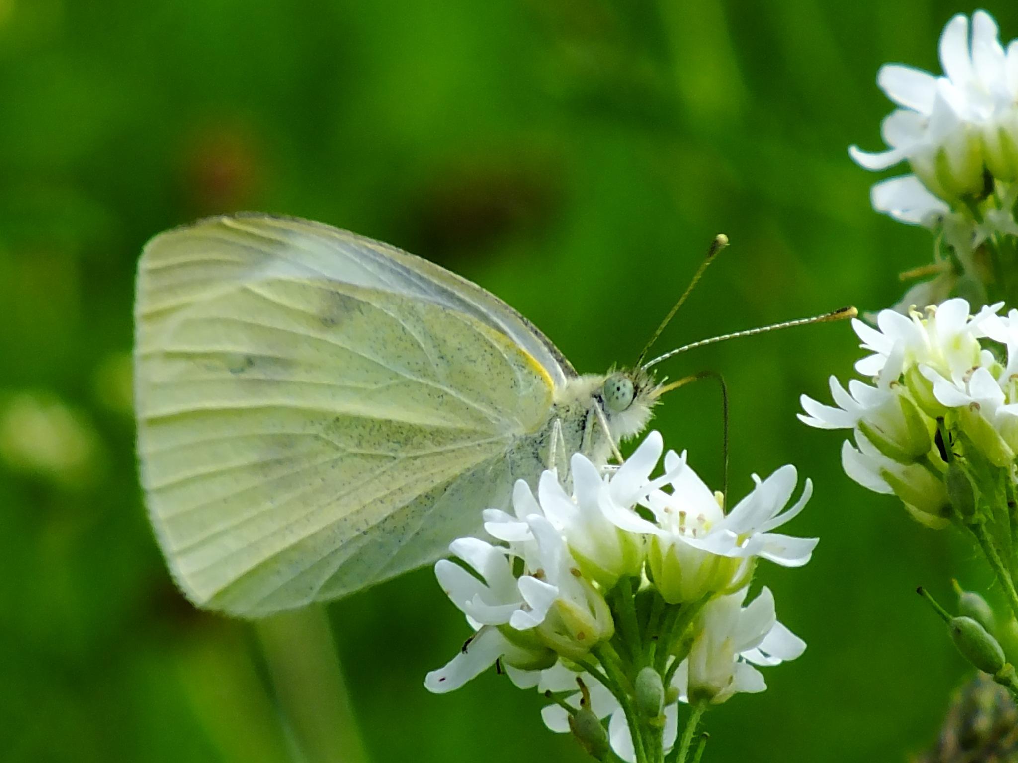 Green & White by jon.rambo.37819