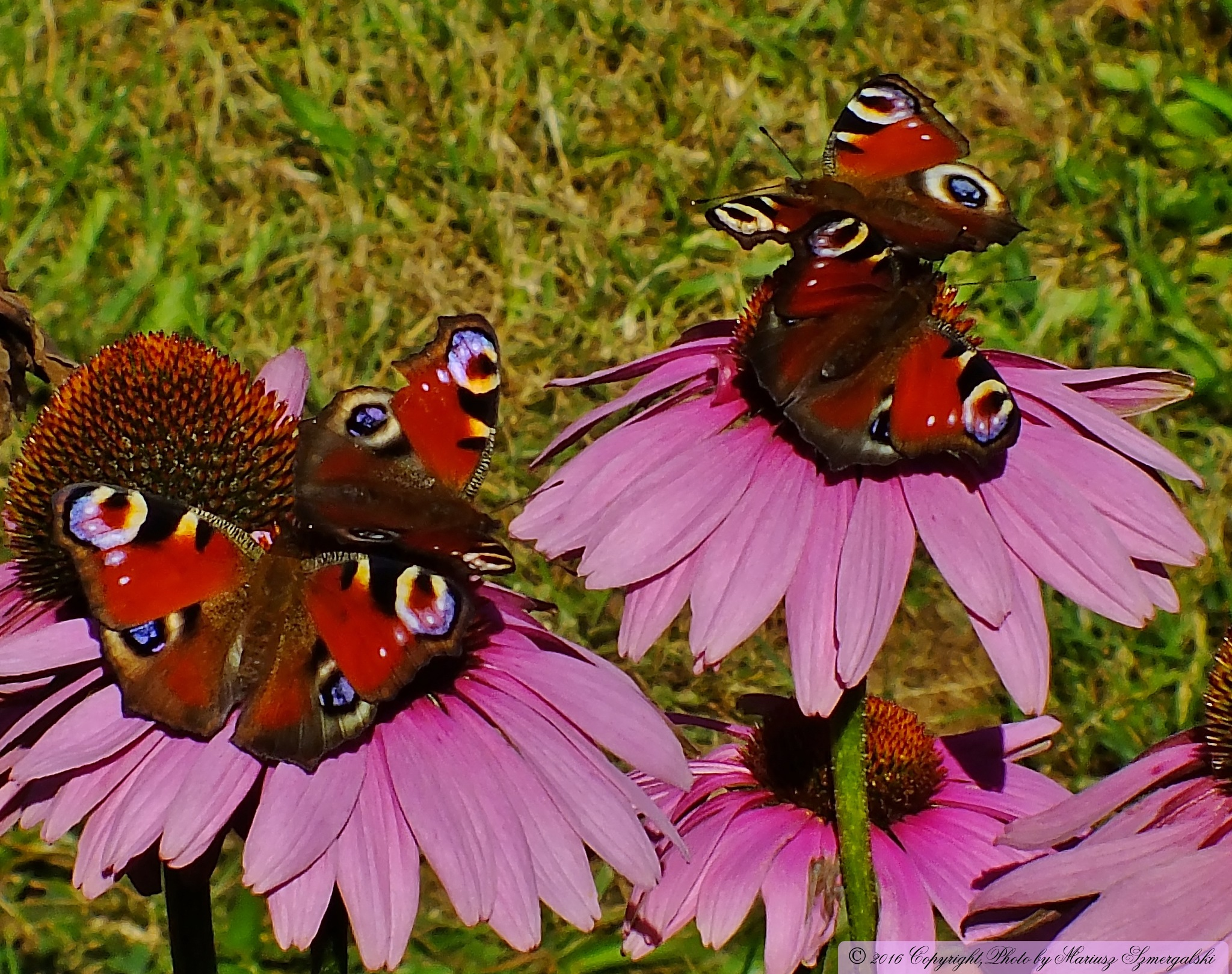 Summer play butterfly. by jon.rambo.37819