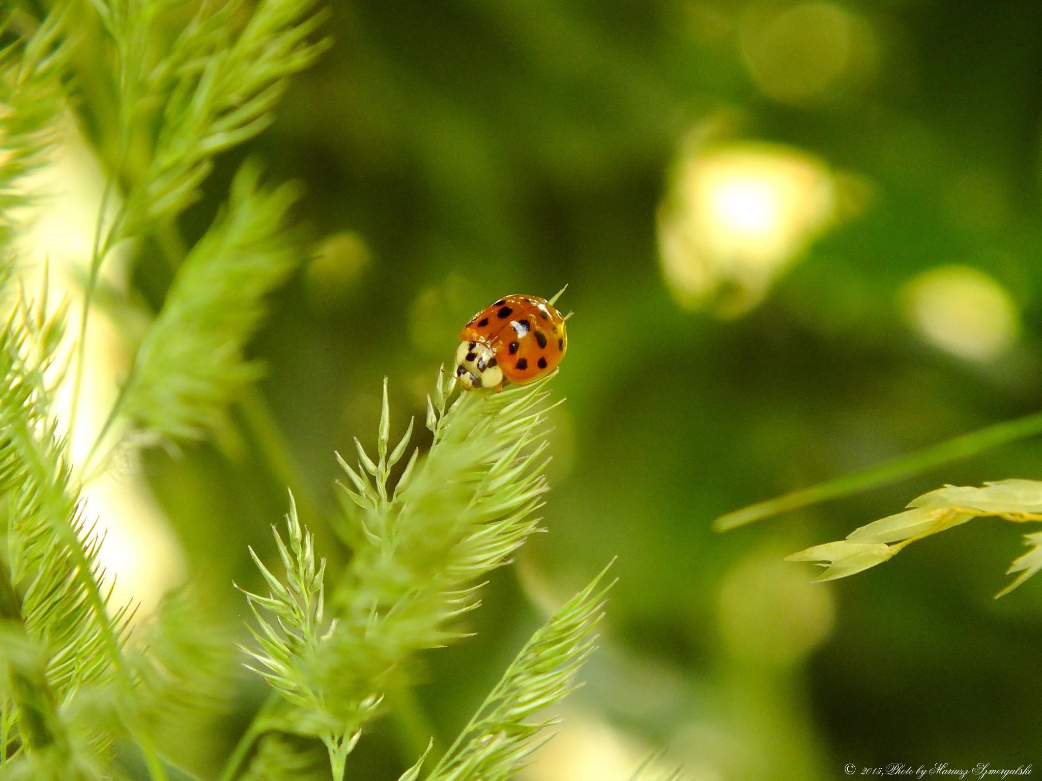 Ladybug. by jon.rambo.37819