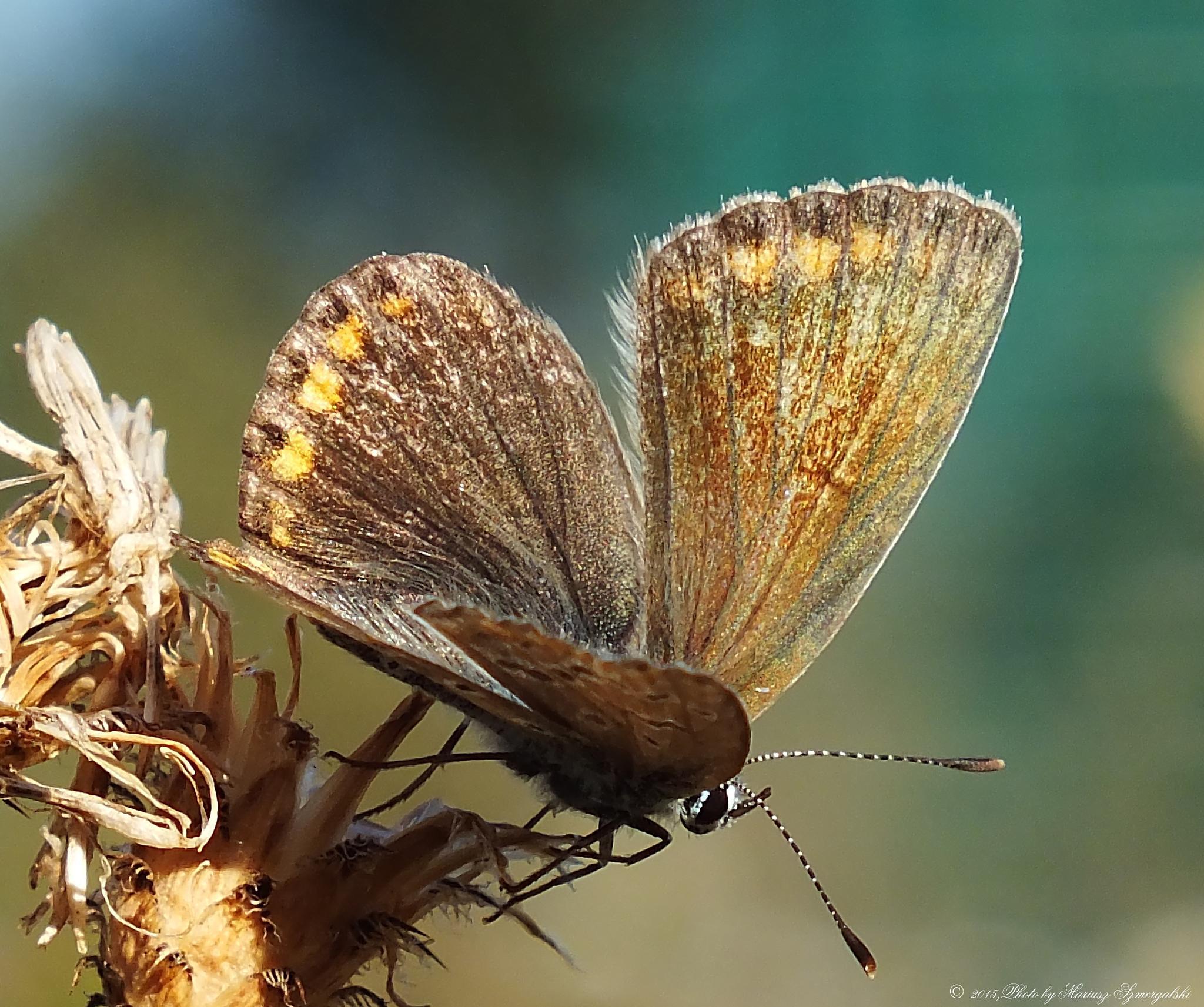 Butterfly. by jon.rambo.37819