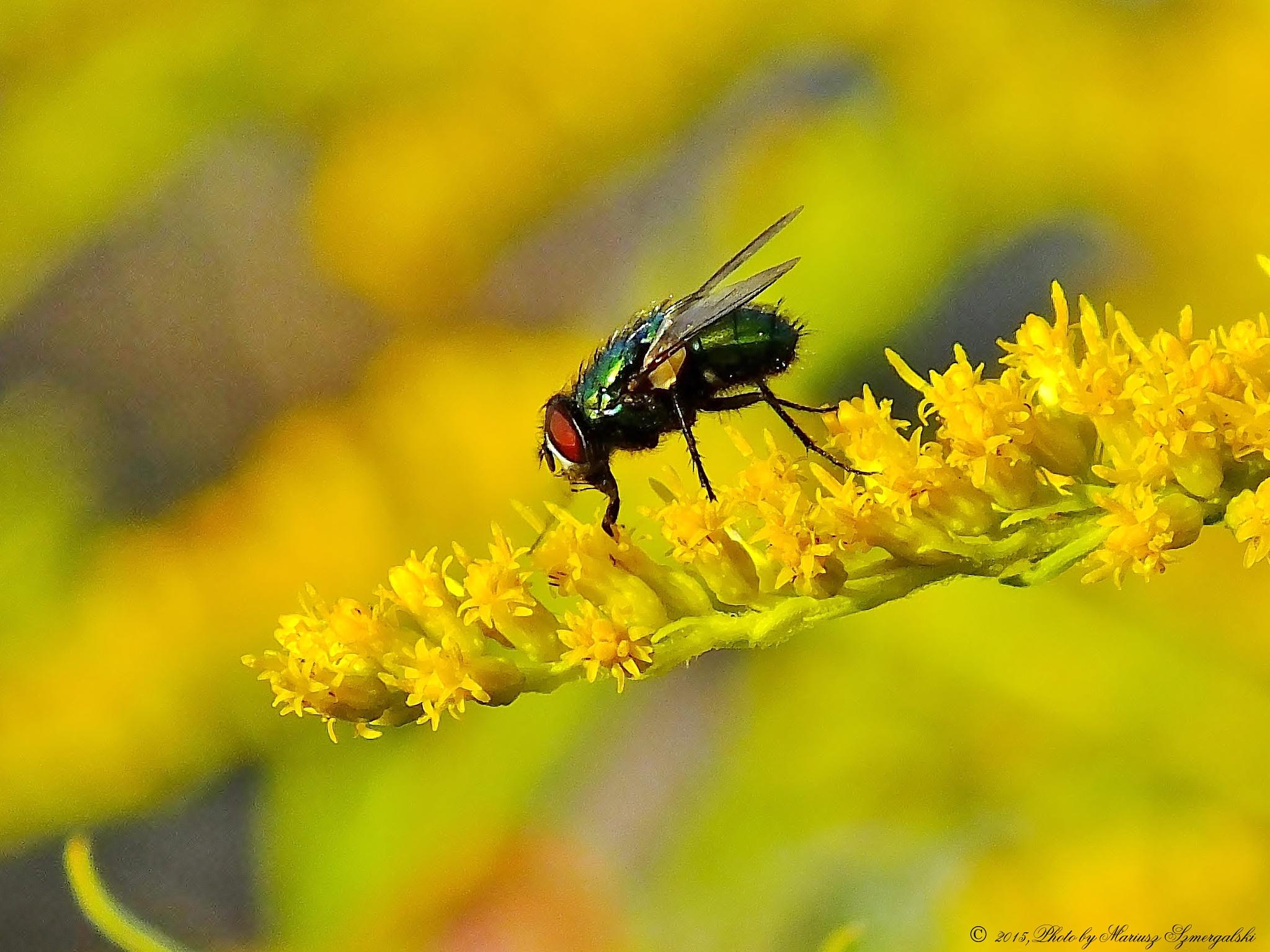 Fly. by jon.rambo.37819