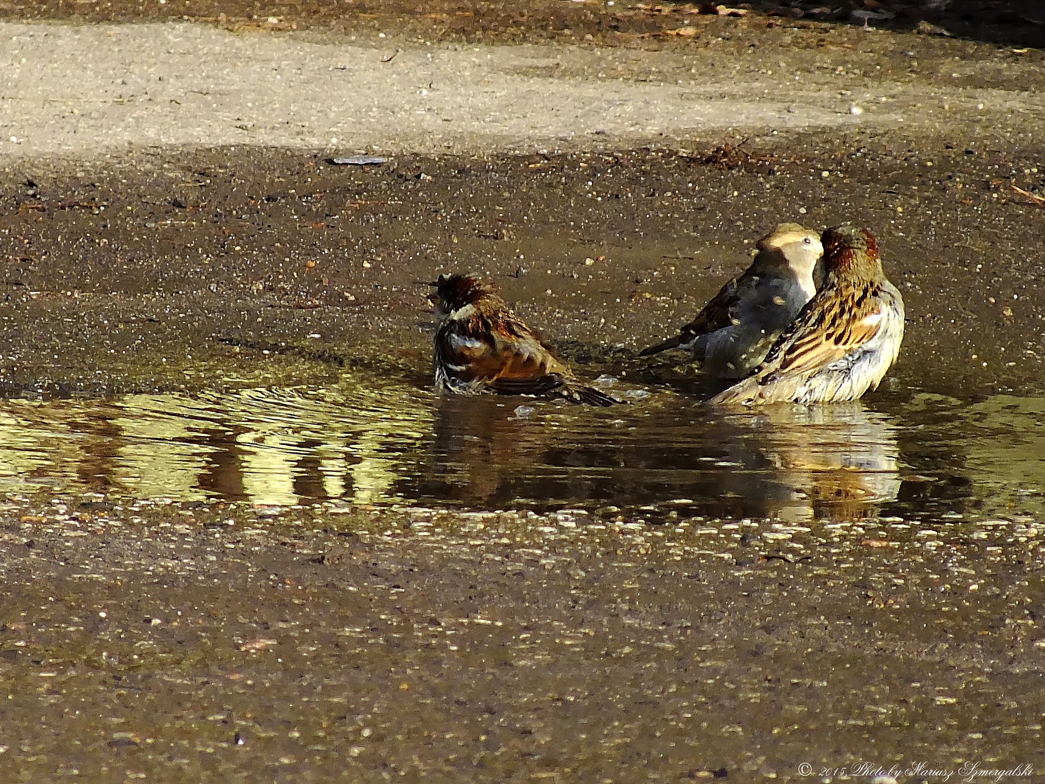 Puddle party. by jon.rambo.37819