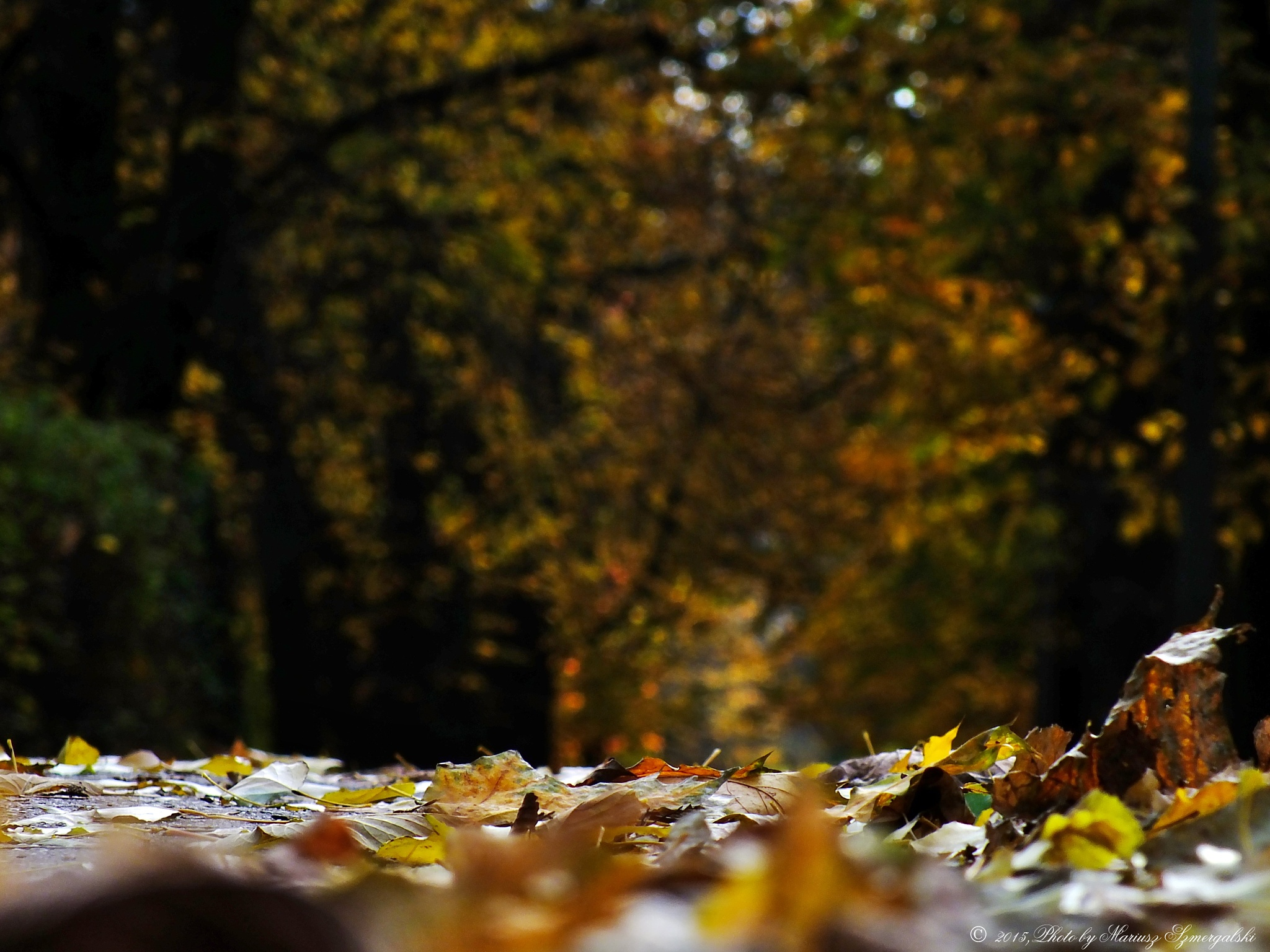 Autumn scene. by jon.rambo.37819