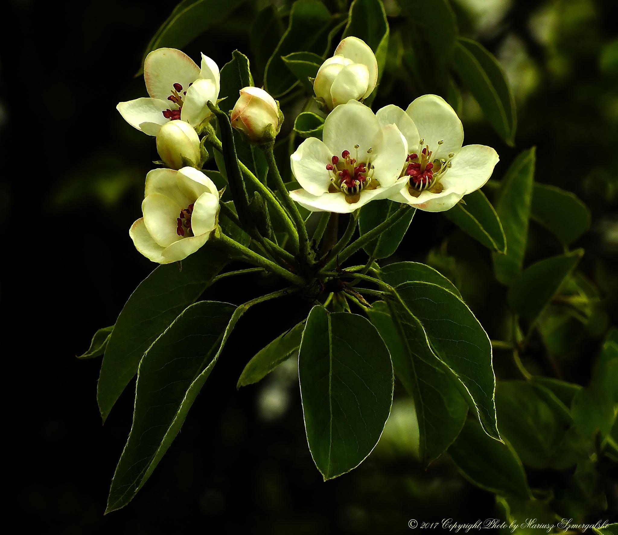 Blossom. by jon.rambo.37819