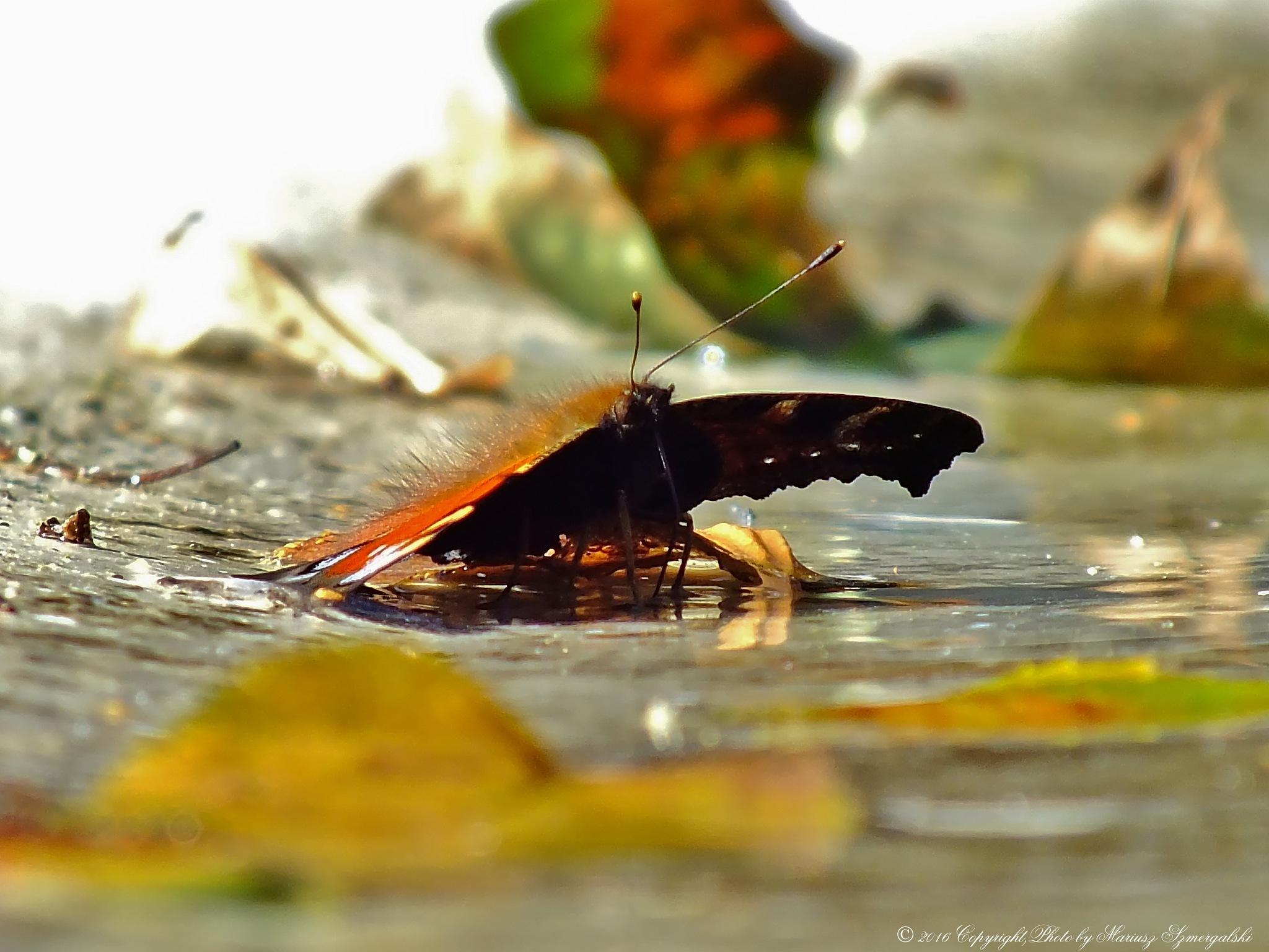 Bather on the water. by jon.rambo.37819