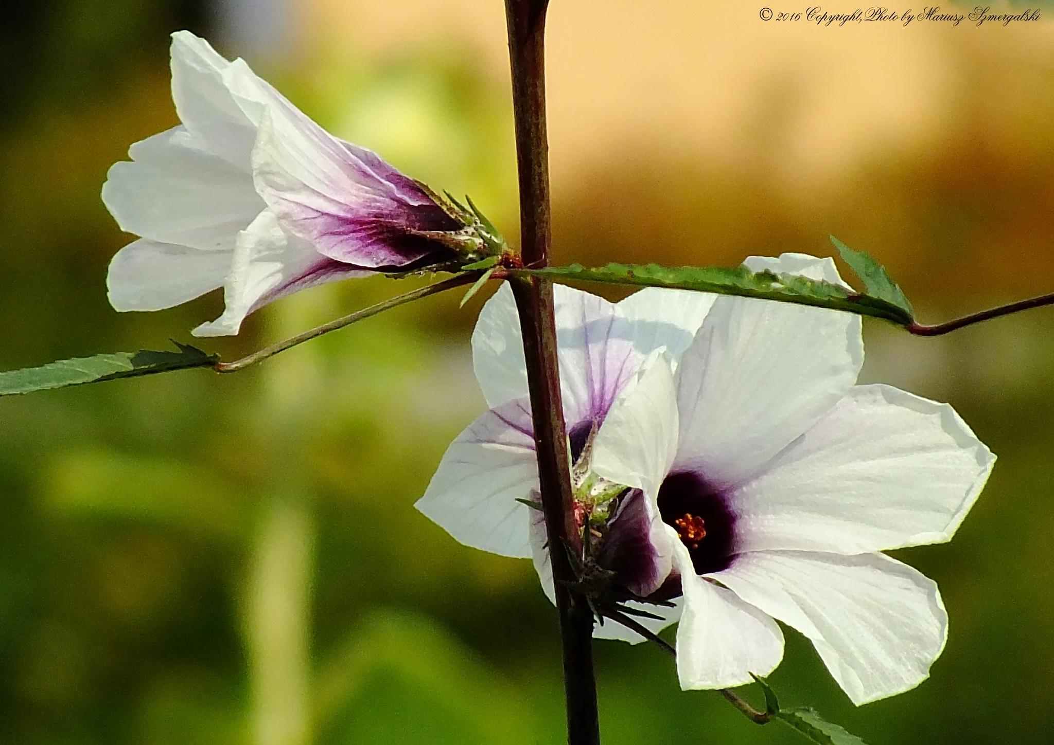 Flowers. by jon.rambo.37819