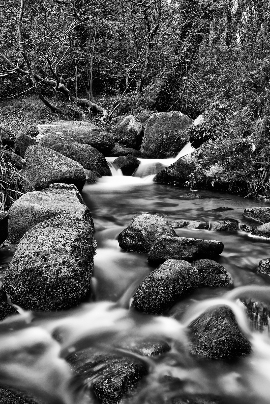 Photo in Black and White #penwith #cornwall #kernow #cornish woodland #west country #south west #west cornwall #south west england #woodland #streams & rivers