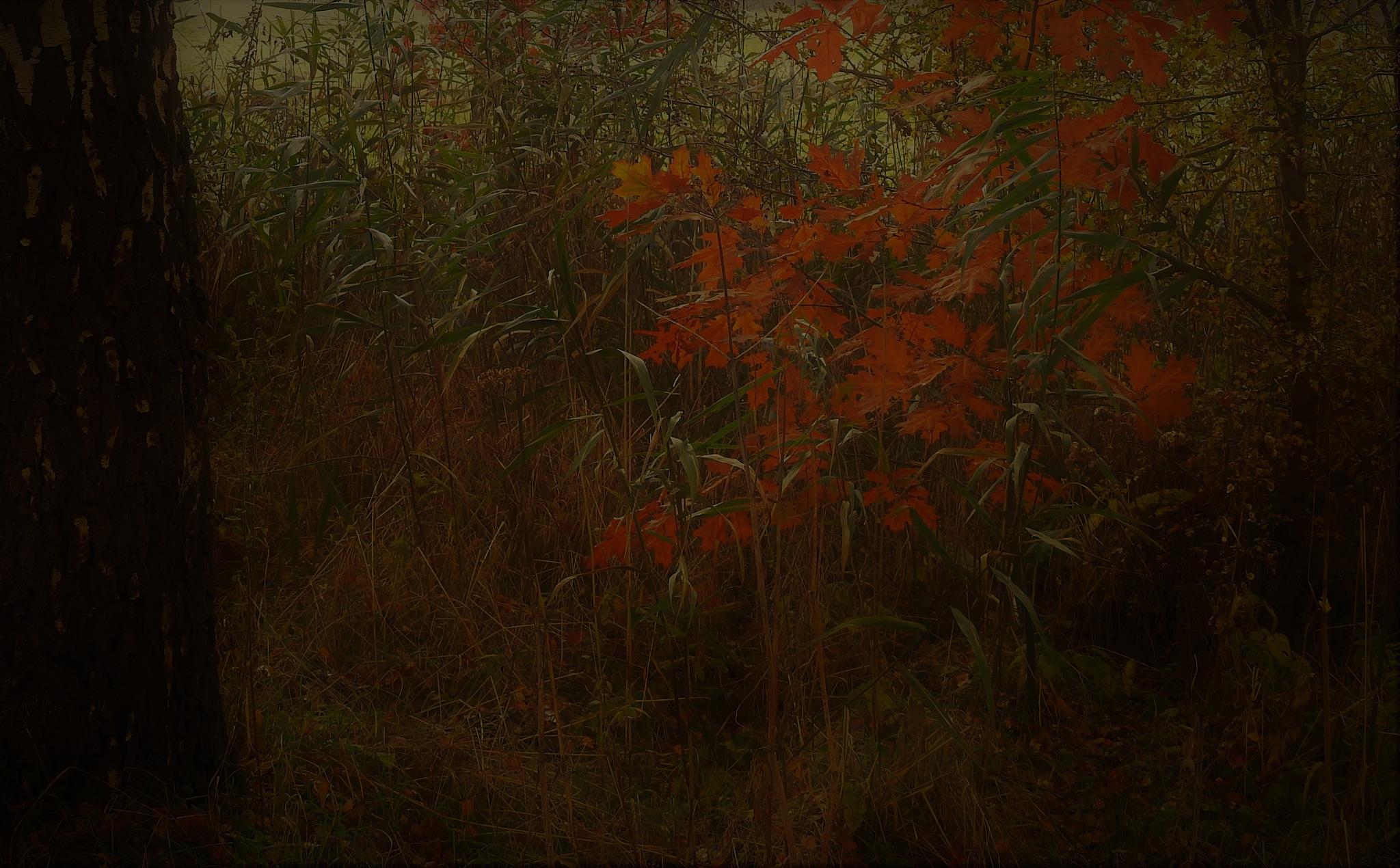 Warme herfstkleur.. by nelly.haelterman