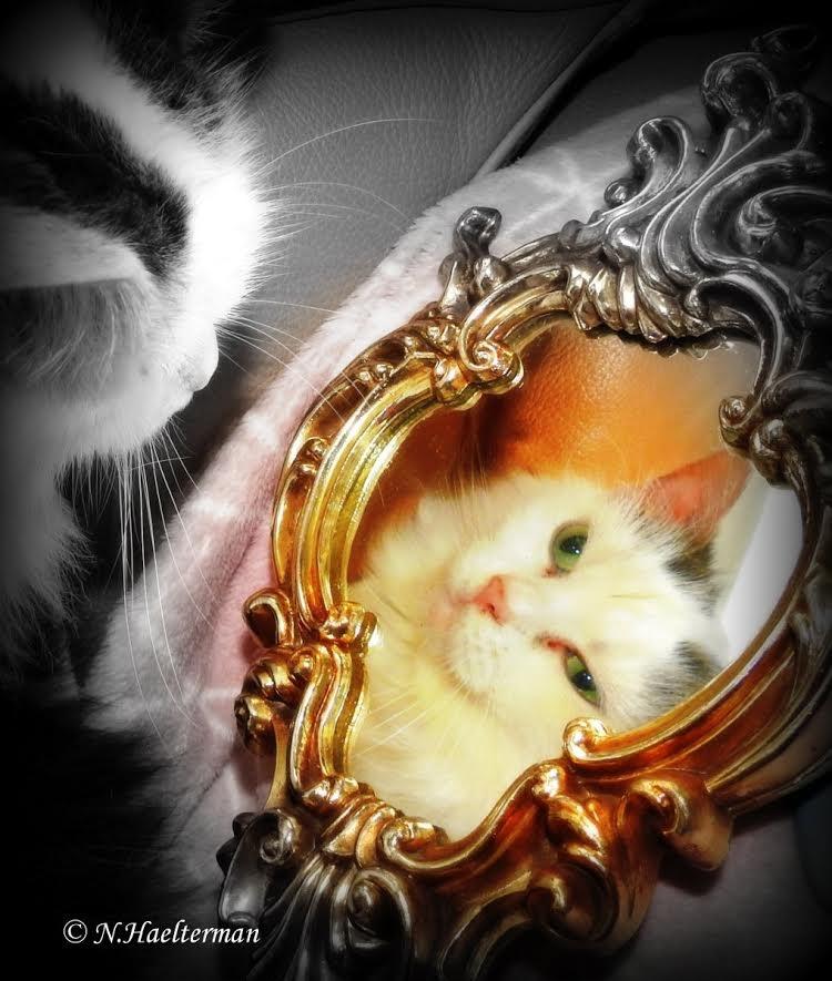Chichie denkt.. Spiegelbeeld, ben ik wel zo oud als jij ... by nelly.haelterman