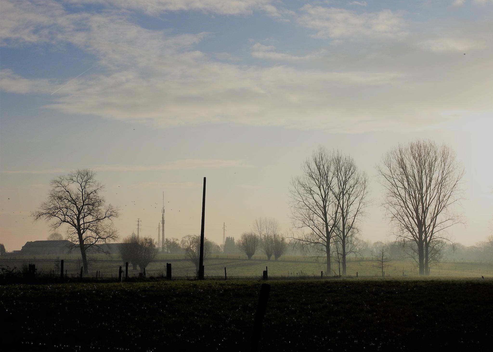 Kale bomen by nelly.haelterman